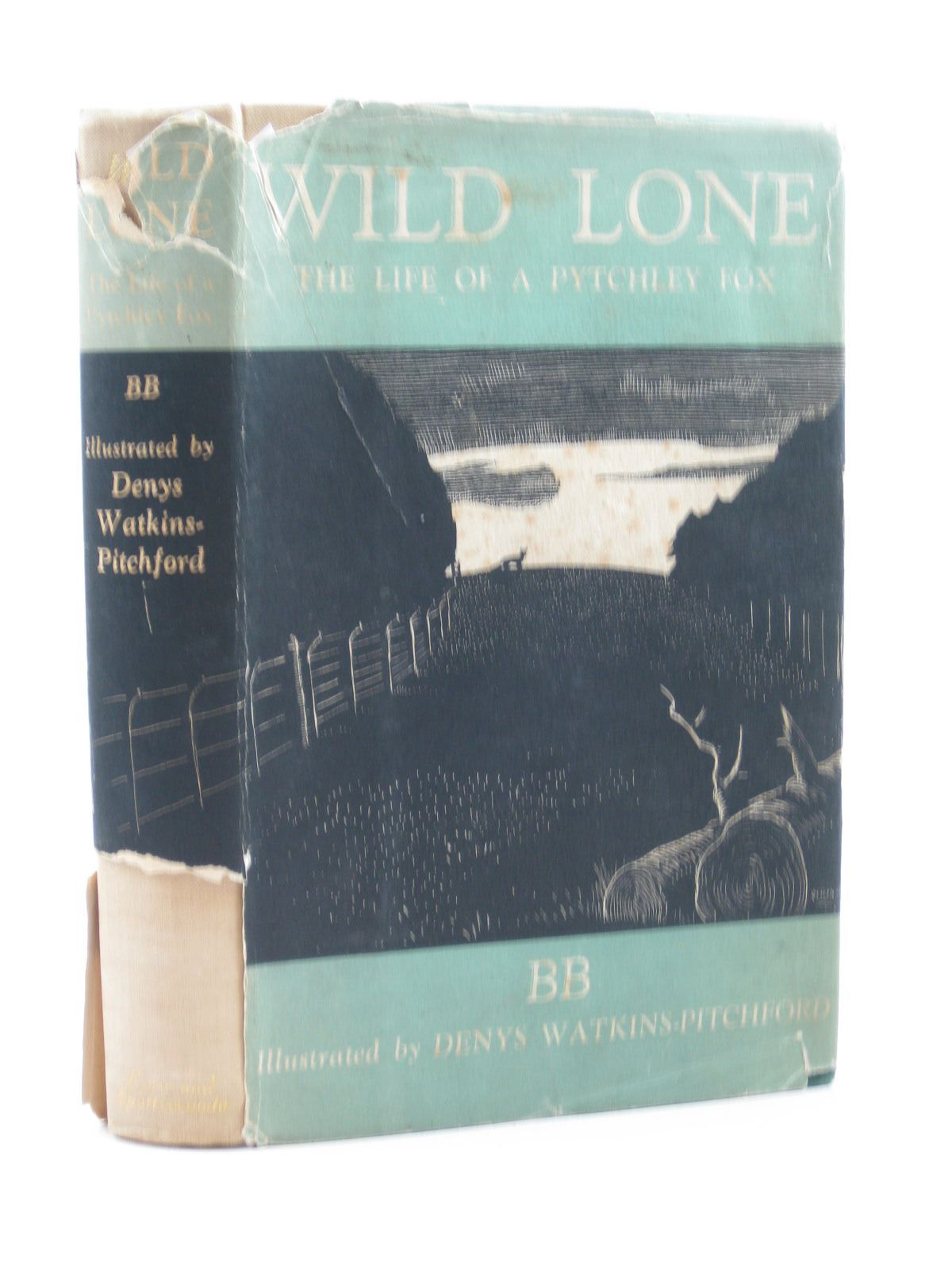 Photo of WILD LONE- Stock Number: 1503113