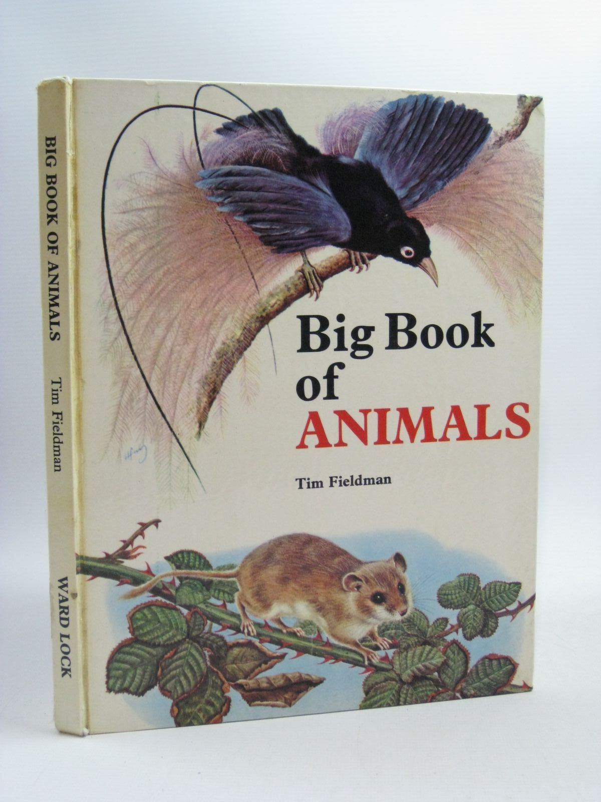 Photo of BIG BOOK OF ANIMALS written by Fieldman, Tim published by Ward, Lock & Co. Limited (STOCK CODE: 1504869)  for sale by Stella & Rose's Books