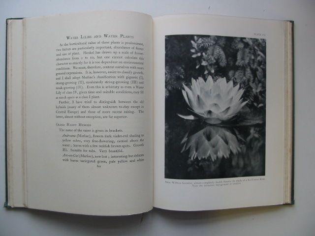 Photo of WATER LILIES AND WATER PLANTS written by Niklitschek, A. published by Chatto & Windus (STOCK CODE: 1802307)  for sale by Stella & Rose's Books