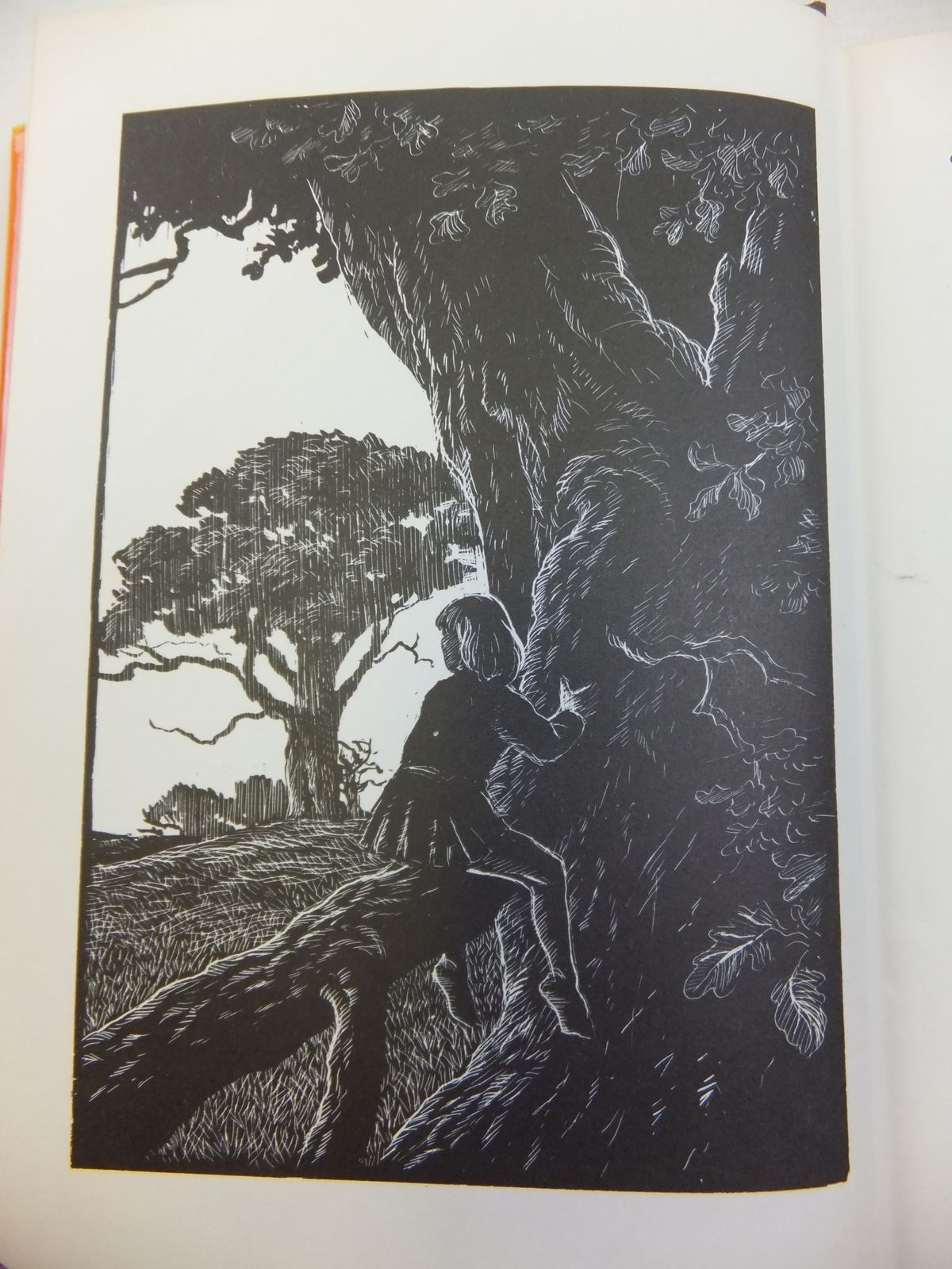 Photo of LORD OF THE FOREST written by BB, illustrated by BB, published by Methuen Children's Books (STOCK CODE: 1810923)  for sale by Stella & Rose's Books