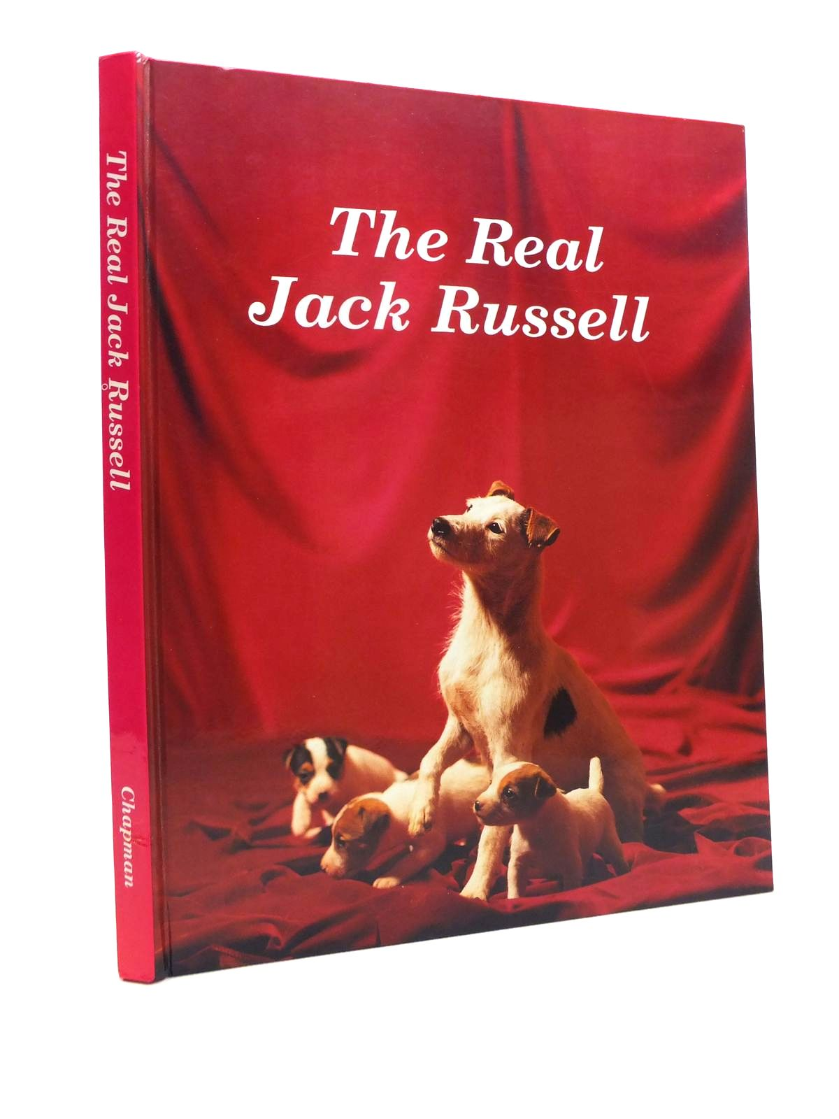 Photo of THE REAL JACK RUSSELL