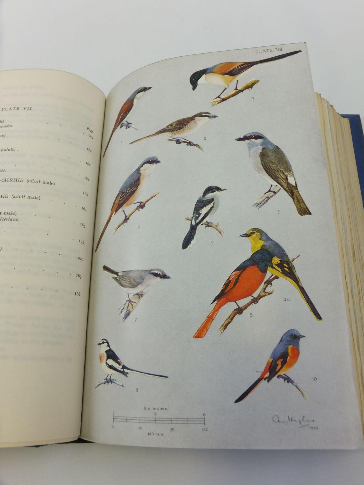 Photo of THE BIRDS OF BURMA written by Smythies, Bertram E. illustrated by Hughes, A.M. published by Oliver and Boyd (STOCK CODE: 1812319)  for sale by Stella & Rose's Books
