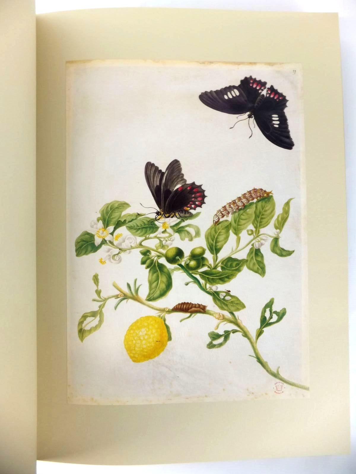 Photo of THE SURINAM ALBUM written by Harvey, Julie illustrated by Merian, Maria Sybylla published by Folio Society (STOCK CODE: 1812675)  for sale by Stella & Rose's Books