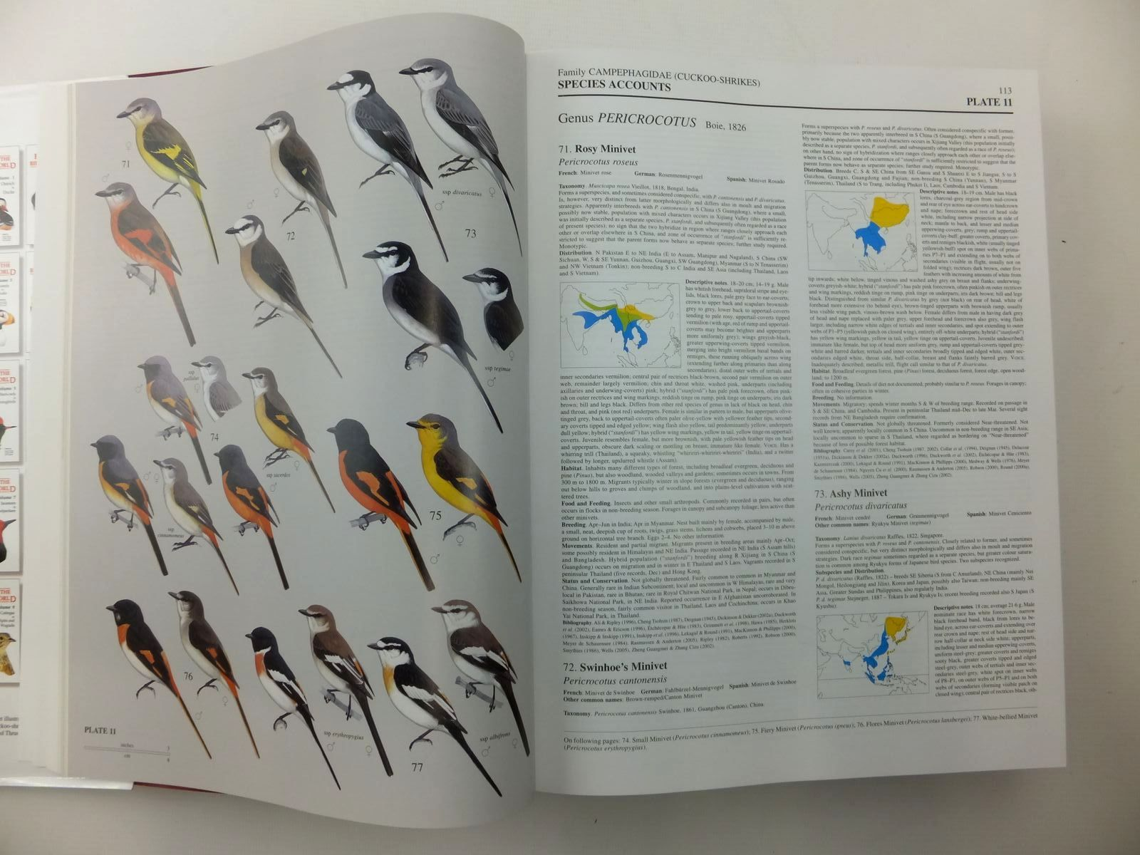 Photo of HANDBOOK OF THE BIRDS OF THE WORLD VOLUME 10: CUCKOO-SHRIKES TO THRUSHES written by Del Hoyo, Josep<br />Elliott, Andrew<br />Christie, David<br />et al, illustrated by Arlott, Norman<br />Burn, Hilary<br />Cox, John<br />et al., published by Lynx Edicions (STOCK CODE: 1814428)  for sale by Stella & Rose's Books