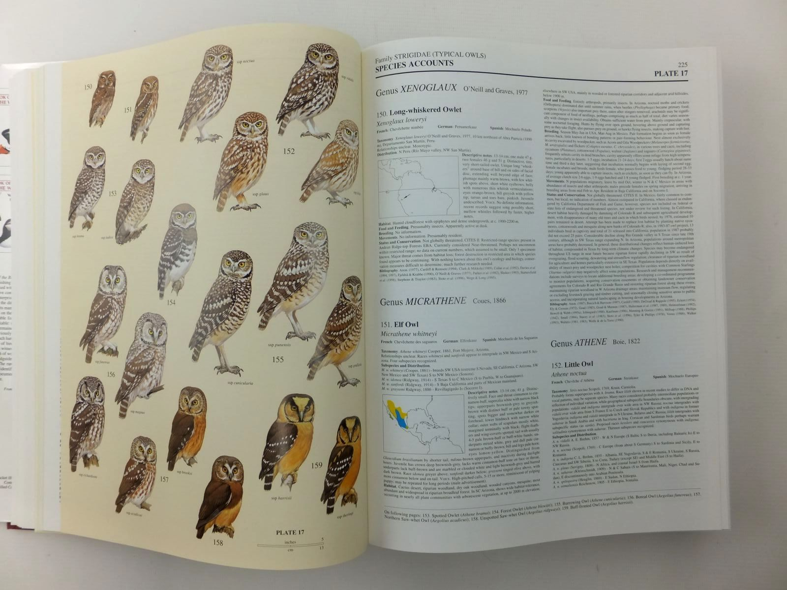 Photo of HANDBOOK OF THE BIRDS OF THE WORLD VOLUME 5: BARN-OWLS TO HUMMINGBIRDS written by Del Hoyo, Josep<br />Elliott, Andrew<br />Sargatal, Jordi illustrated by Allen, Richard<br />Arlott, Norman<br />et al., published by Lynx Edicions (STOCK CODE: 1814452)  for sale by Stella & Rose's Books