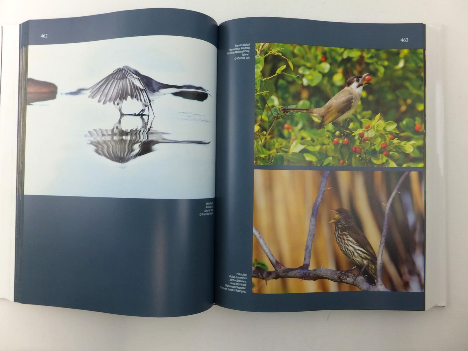 Photo of HANDBOOK OF THE BIRDS OF THE WORLD SPECIAL VOLUME: NEW SPECIES AND GLOBAL INDEX written by Del Hoyo, Josep<br />Elliott, Andrew<br />Sargatal, Jordi<br />Christie, David illustrated by Burn, Hilary<br />Rose, Chris<br />Fjeldsa, Jon<br />et al., published by Lynx Edicions (STOCK CODE: 1814453)  for sale by Stella & Rose's Books