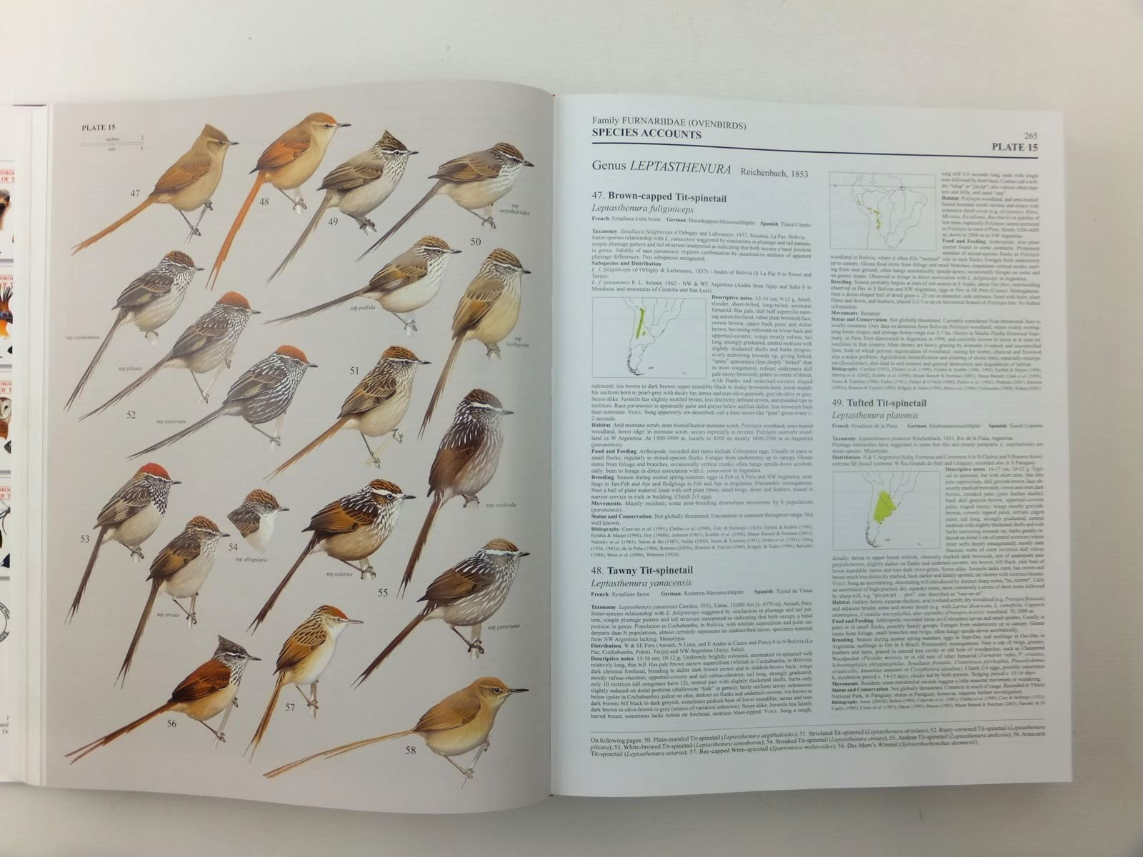 Photo of HANDBOOK OF THE BIRDS OF THE WORLD VOLUME 8: BROADBILLS TO TAPACULOS written by Del Hoyo, Josep<br />Elliott, Andrew<br />Christie, David<br />et al, illustrated by Arlott, Norman<br />Burn, Hilary<br />Cox, John<br />et al., published by Lynx Edicions (STOCK CODE: 1814455)  for sale by Stella & Rose's Books