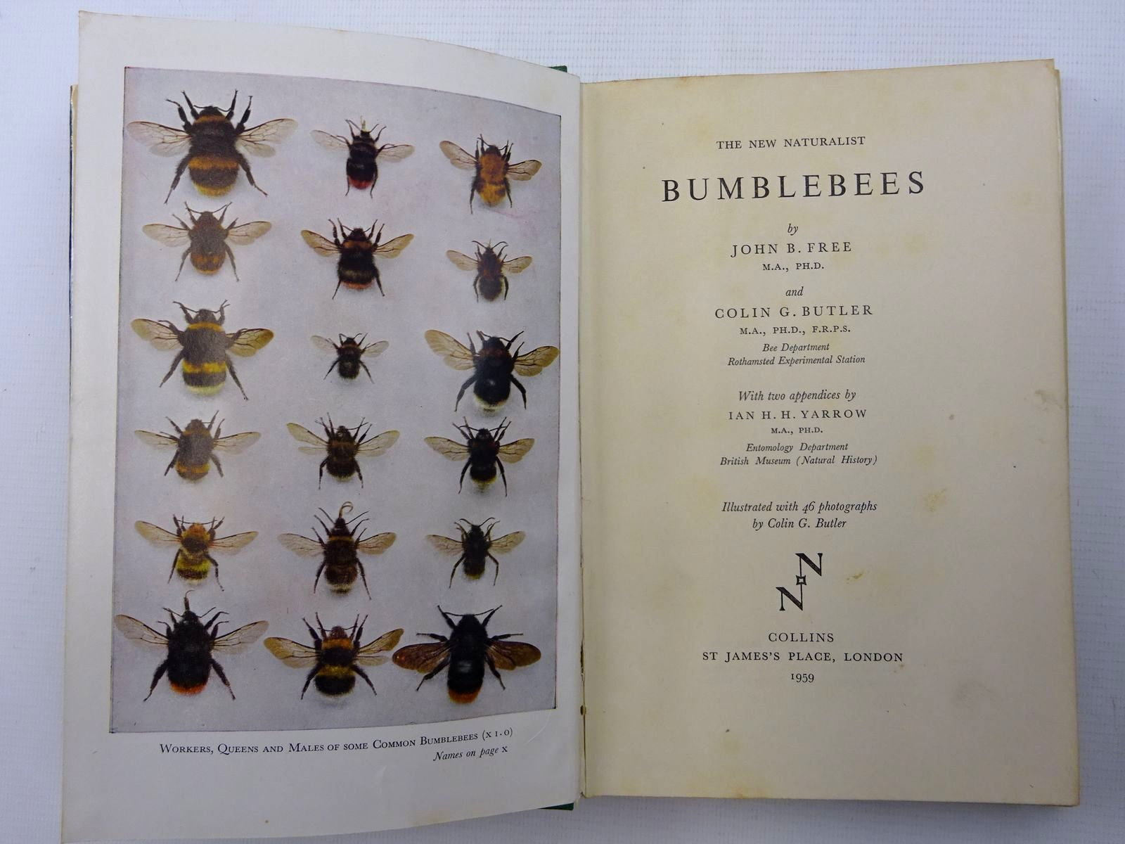 Photo of BUMBLEBEES (NN 40) written by Free, John B.<br />Butler, Colin G. published by Collins (STOCK CODE: 1816258)  for sale by Stella & Rose's Books