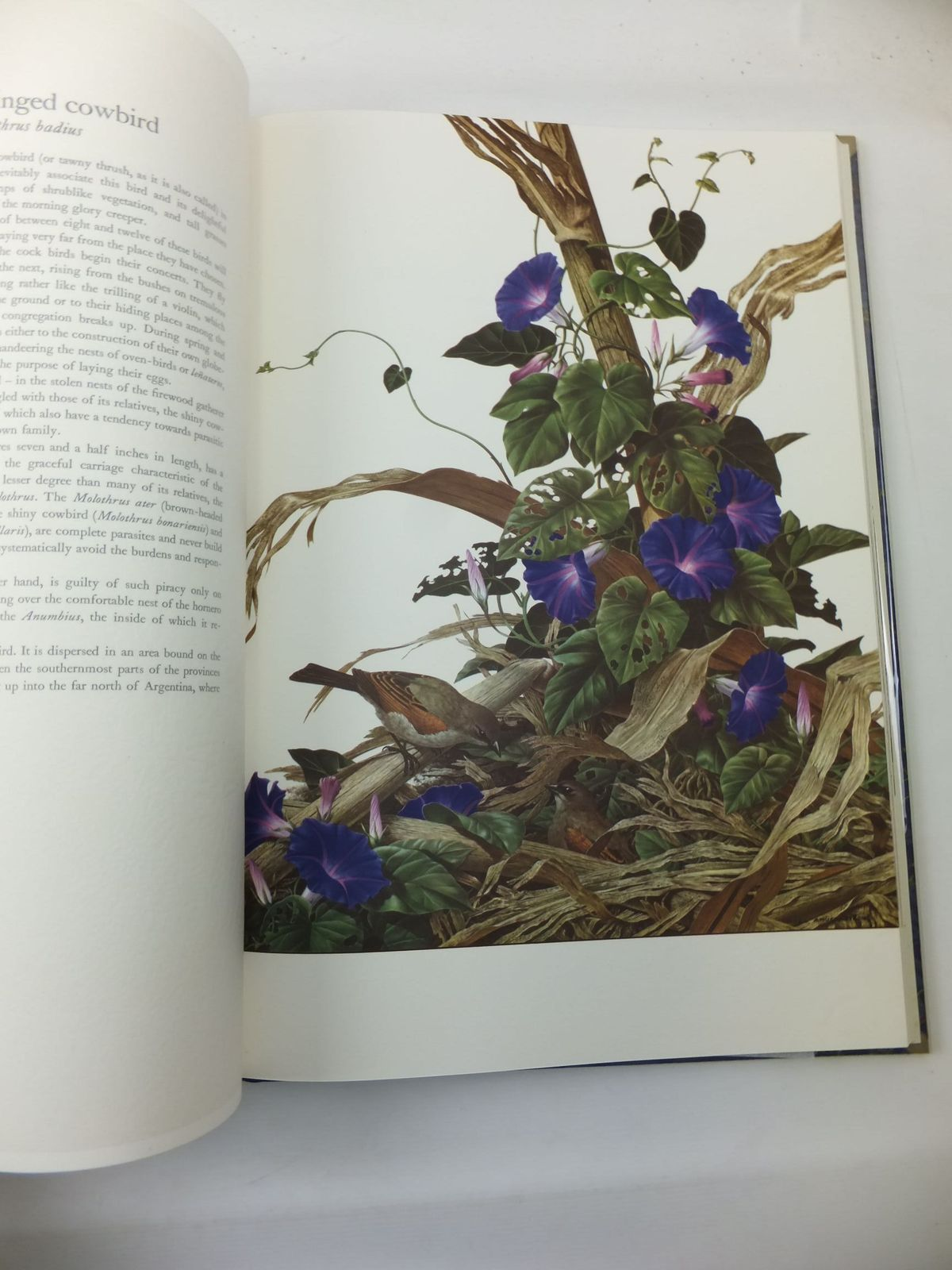 Photo of SOME BIRDS AND MAMMALS OF SOUTH AMERICA written by Sitwell, Sacheverell<br />Andrade, Carlos Selva illustrated by Amuchastegui, Axel published by The Tryon Gallery, George Rainbird (STOCK CODE: 2111295)  for sale by Stella & Rose's Books