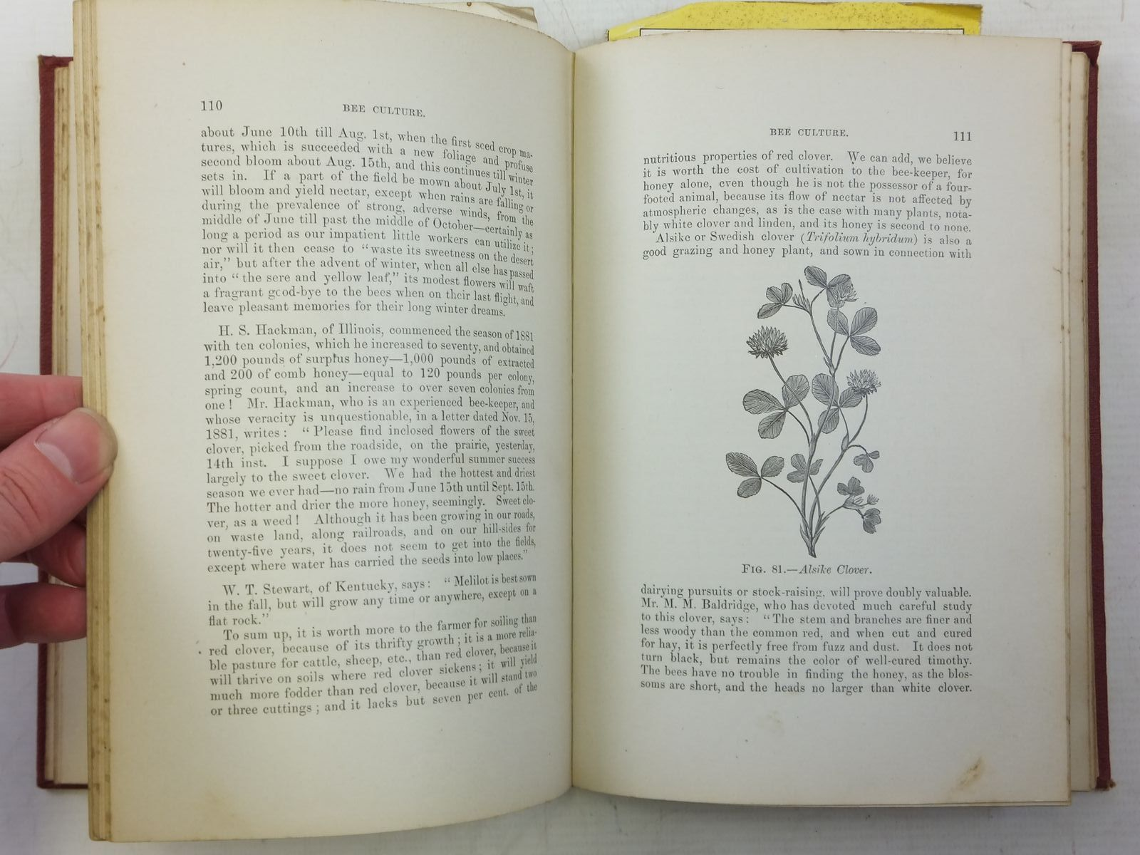 Photo of BEES AND HONEY written by Newman, Thomas G. published by American Bee Journal (STOCK CODE: 2119699)  for sale by Stella & Rose's Books