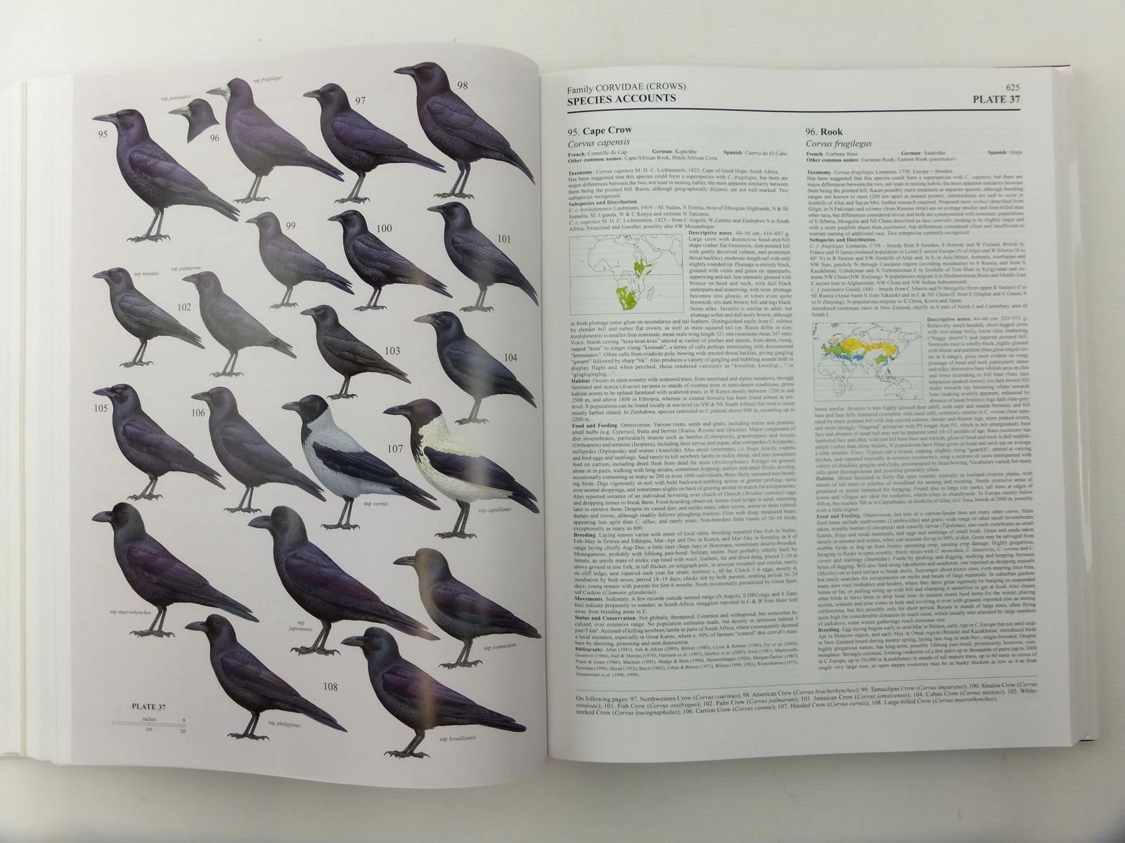 Photo of HANDBOOK OF THE BIRDS OF THE WORLD VOLUME 14: BUSH-SHRIKES TO OLD WORLD SPARROWS written by Del Hoyo, Josep<br />Elliott, Andrew<br />Christie, David<br />et al,  illustrated by Arlott, Norman<br />Burn, Hilary<br />Rose, Chris<br />et al.,  published by Lynx Edicions (STOCK CODE: 2123517)  for sale by Stella & Rose's Books