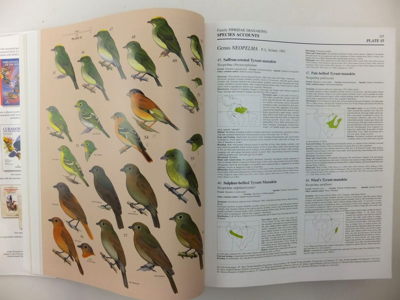 Photo of HANDBOOK OF THE BIRDS OF THE WORLD VOLUME 9: COTINGAS TO PIPITS AND WAGTAILS written by Del Hoyo, Josep<br />Elliott, Andrew<br />Christie, David<br />et al, illustrated by Arlott, Norman<br />Burn, Hilary<br />Cox, John<br />et al., published by Lynx Edicions (STOCK CODE: 2123525)  for sale by Stella & Rose's Books