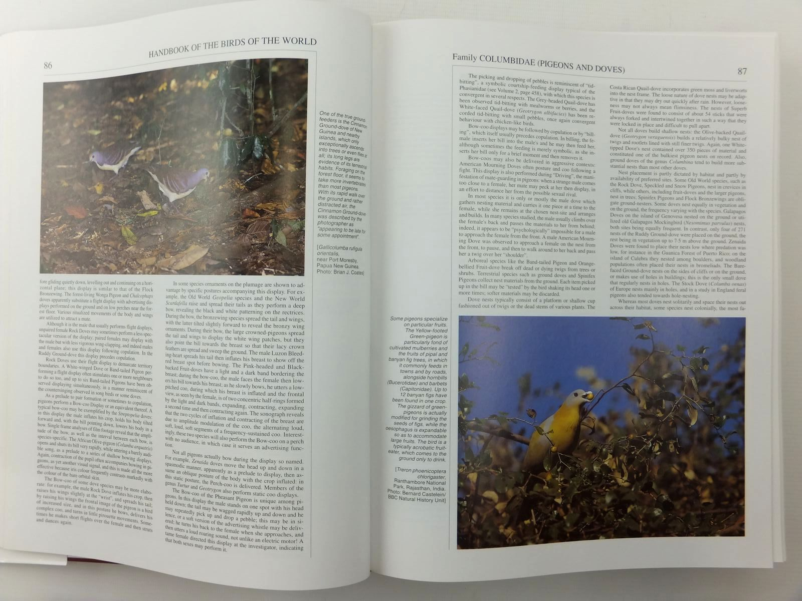 Photo of HANDBOOK OF THE BIRDS OF THE WORLD VOLUME 4: SANDGROUSE TO CUCKOOS written by Del Hoyo, Josep<br />Elliott, Andrew<br />Sargatal, Jordi<br />et al, illustrated by Allen, Richard<br />Burn, Hilary<br />Cox, John<br />et al., published by Lynx Edicions (STOCK CODE: 2123530)  for sale by Stella & Rose's Books