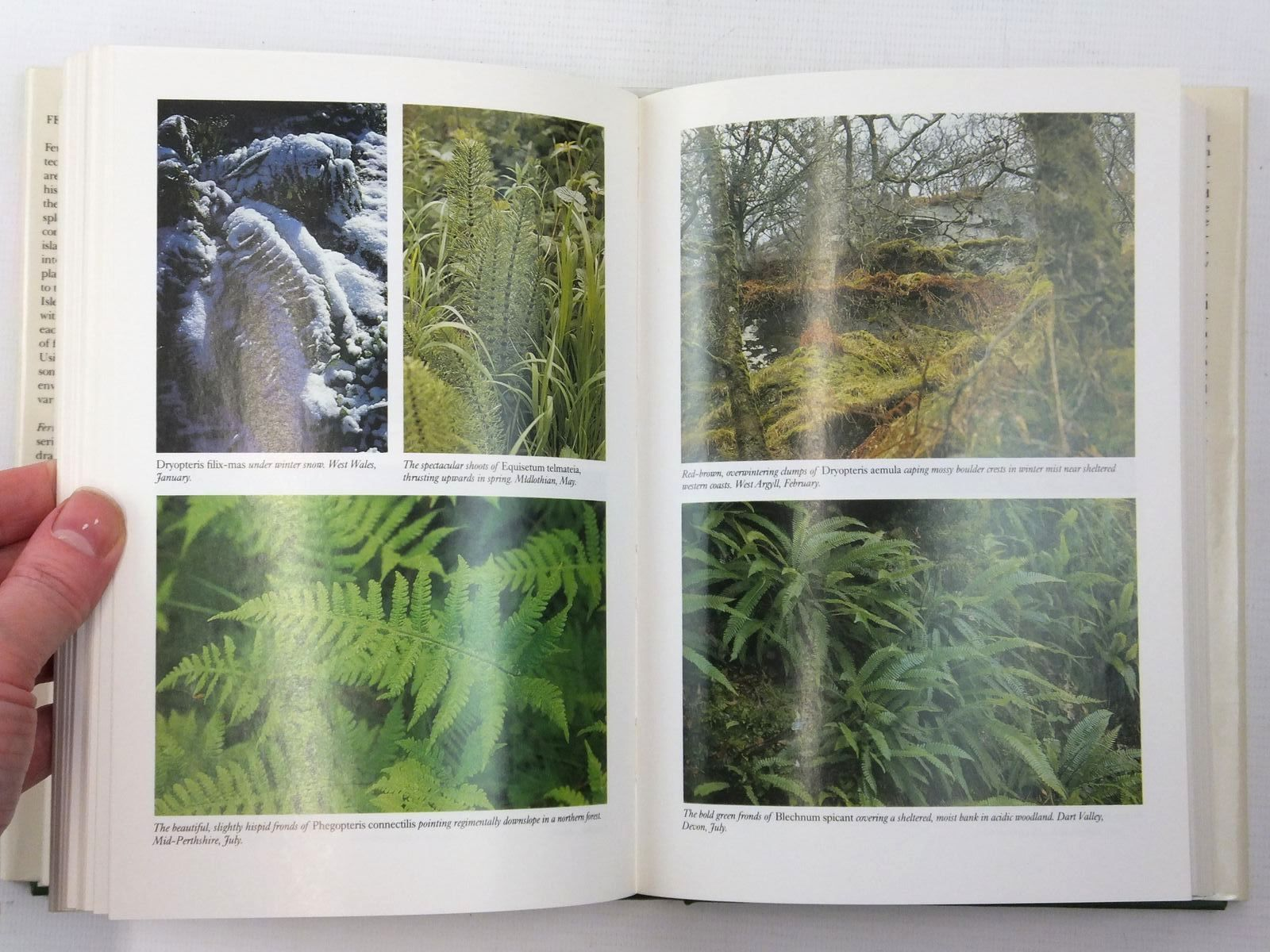 Photo of FERNS (NN74) written by Page, Christopher N. published by Collins (STOCK CODE: 2123833)  for sale by Stella & Rose's Books