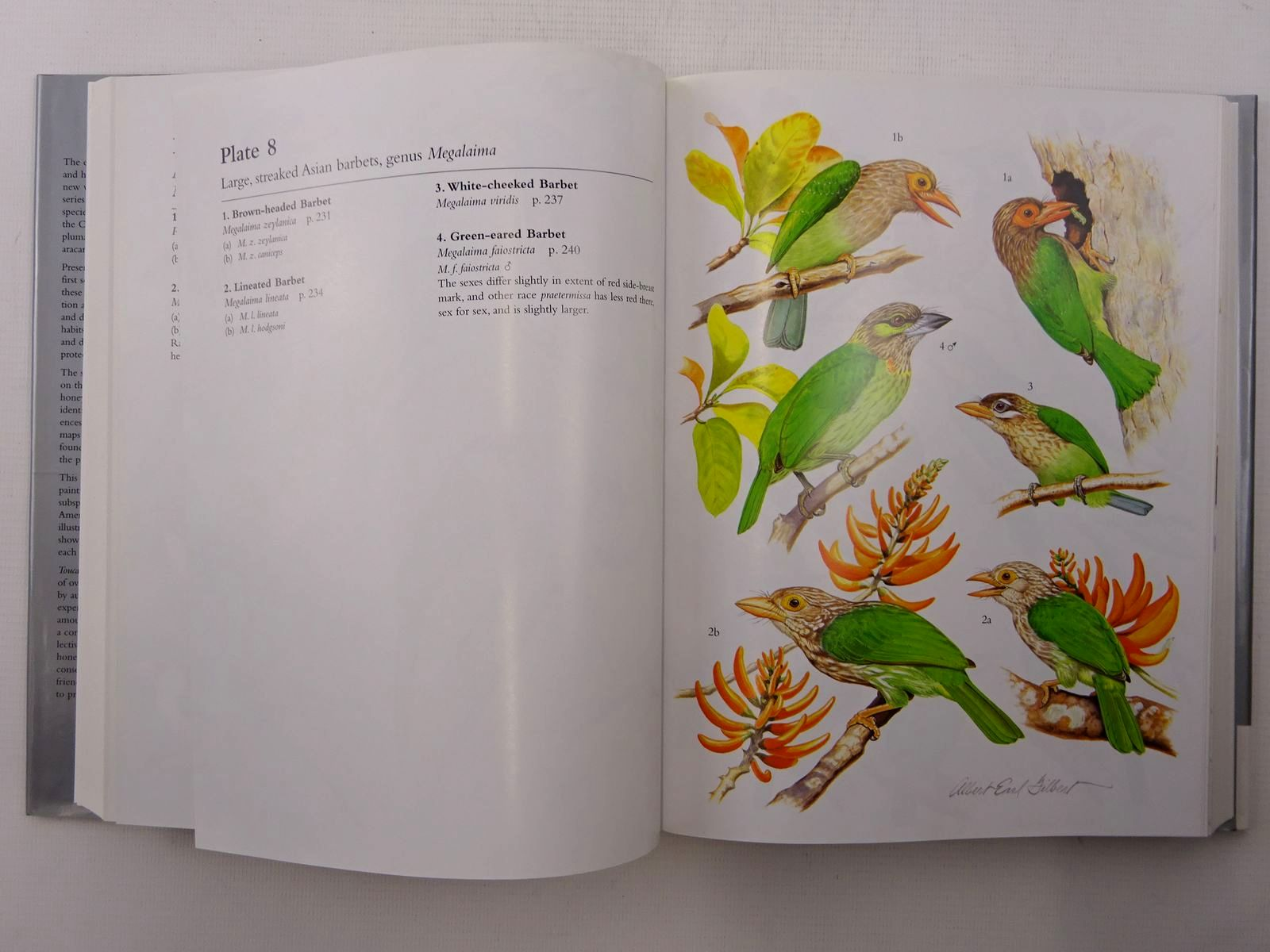 Photo of TOUCANS, BARBETS AND HONEYGUIDES (BIRD FAMILIES OF THE WORLD) written by Short, Lester L.<br />Horne, Jennifer F.M. illustrated by Gilbert, Albert Earl published by Oxford University Press (STOCK CODE: 2124940)  for sale by Stella & Rose's Books