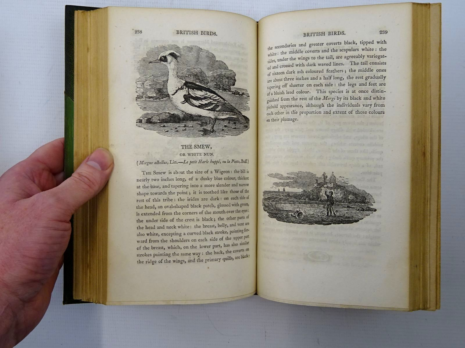 Photo of A HISTORY OF BRITISH BIRDS (2 VOLS) written by Bewick, Thomas illustrated by Bewick, Thomas (STOCK CODE: 2125941)  for sale by Stella & Rose's Books
