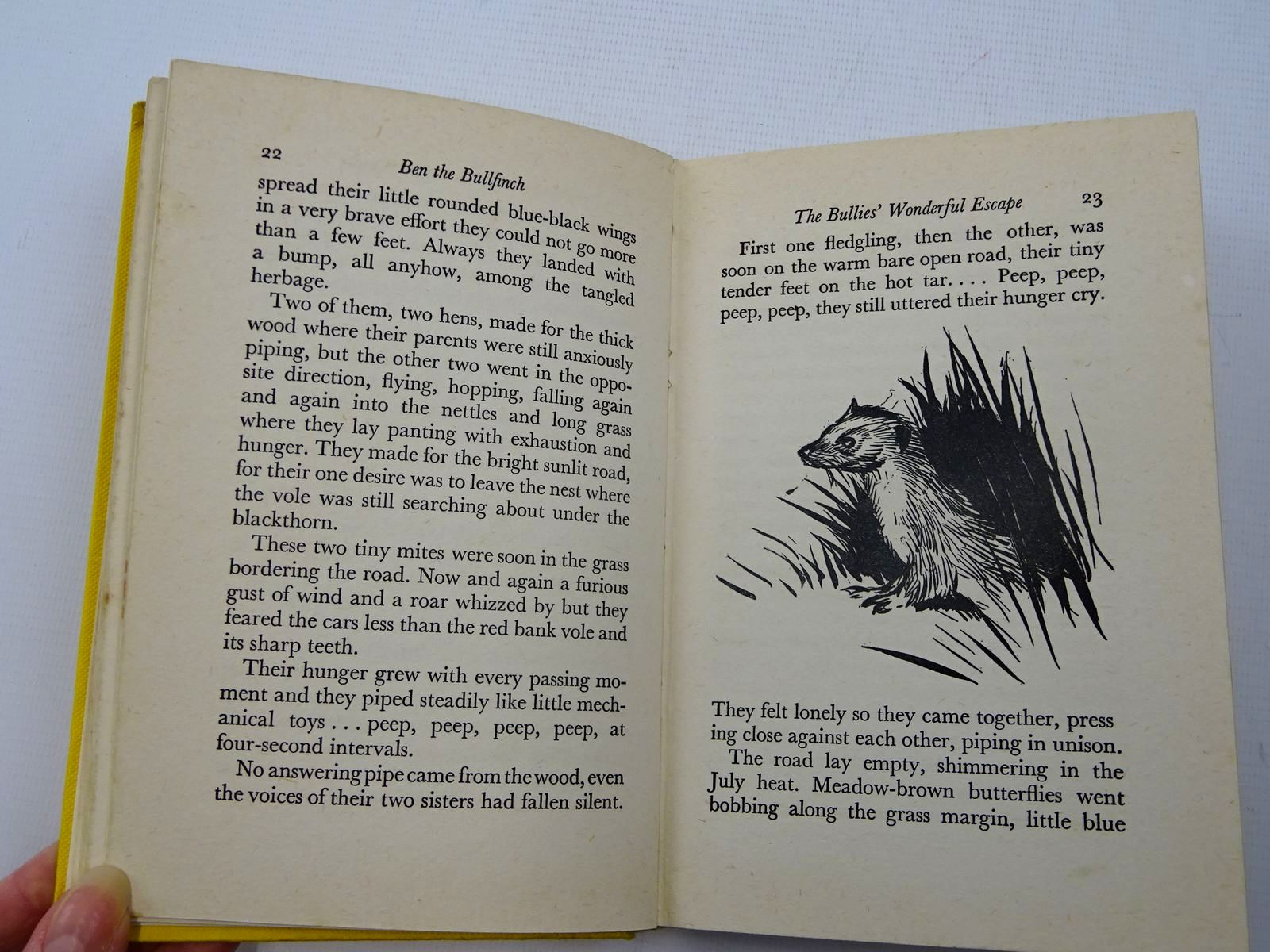 Photo of BEN THE BULLFINCH written by BB,  illustrated by BB,  published by Hamish Hamilton (STOCK CODE: 2126106)  for sale by Stella & Rose's Books