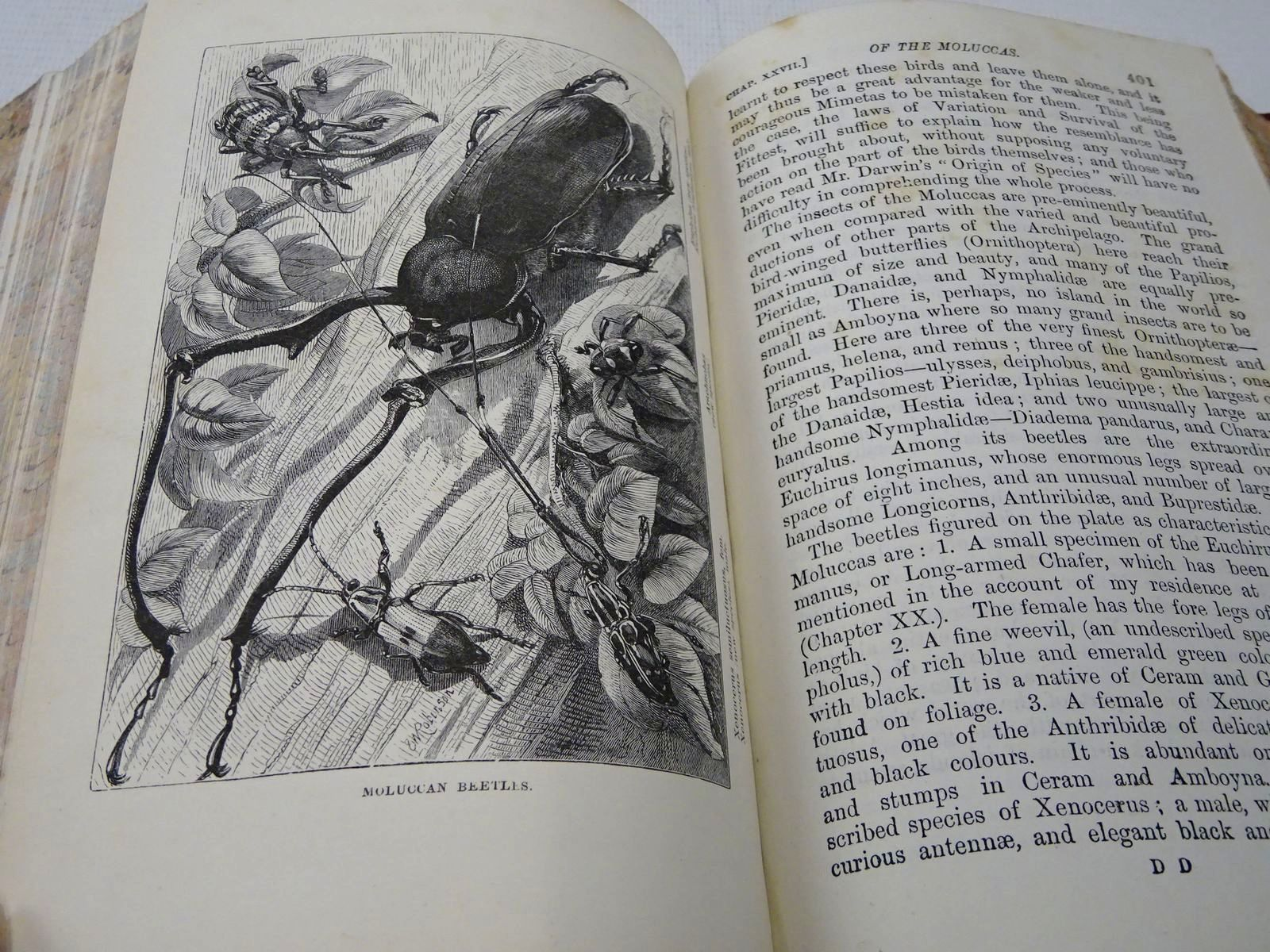 Photo of THE MALAY ARCHIPELAGO written by Wallace, Alfred Russel published by Macmillan & Co. (STOCK CODE: 2127689)  for sale by Stella & Rose's Books