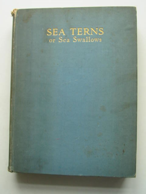Photo of SEA TERNS OR SEA SWALLOWS written by Marples, George<br />Marples, Anne published by Country Life Limited (STOCK CODE: 631487)  for sale by Stella & Rose's Books