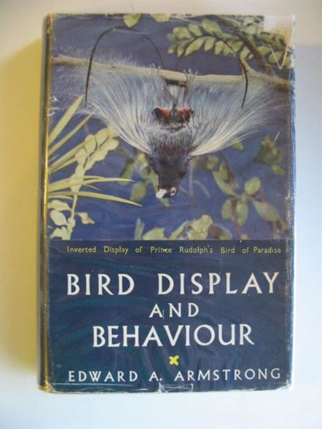 Photo of BIRD DISPLAY AND BEHAVIOUR written by Armstrong, Edward A. published by Lindsay Drummond Ltd. (STOCK CODE: 663614)  for sale by Stella & Rose's Books