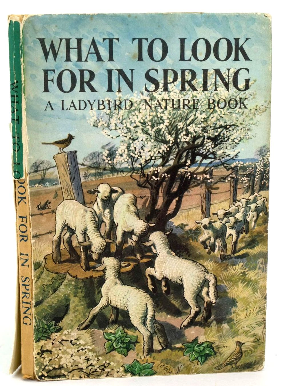 Photo of WHAT TO LOOK FOR IN SPRING written by Watson, E.L. Grant illustrated by Tunnicliffe, C.F. published by Wills & Hepworth Ltd. (STOCK CODE: 1318530)  for sale by Stella & Rose's Books