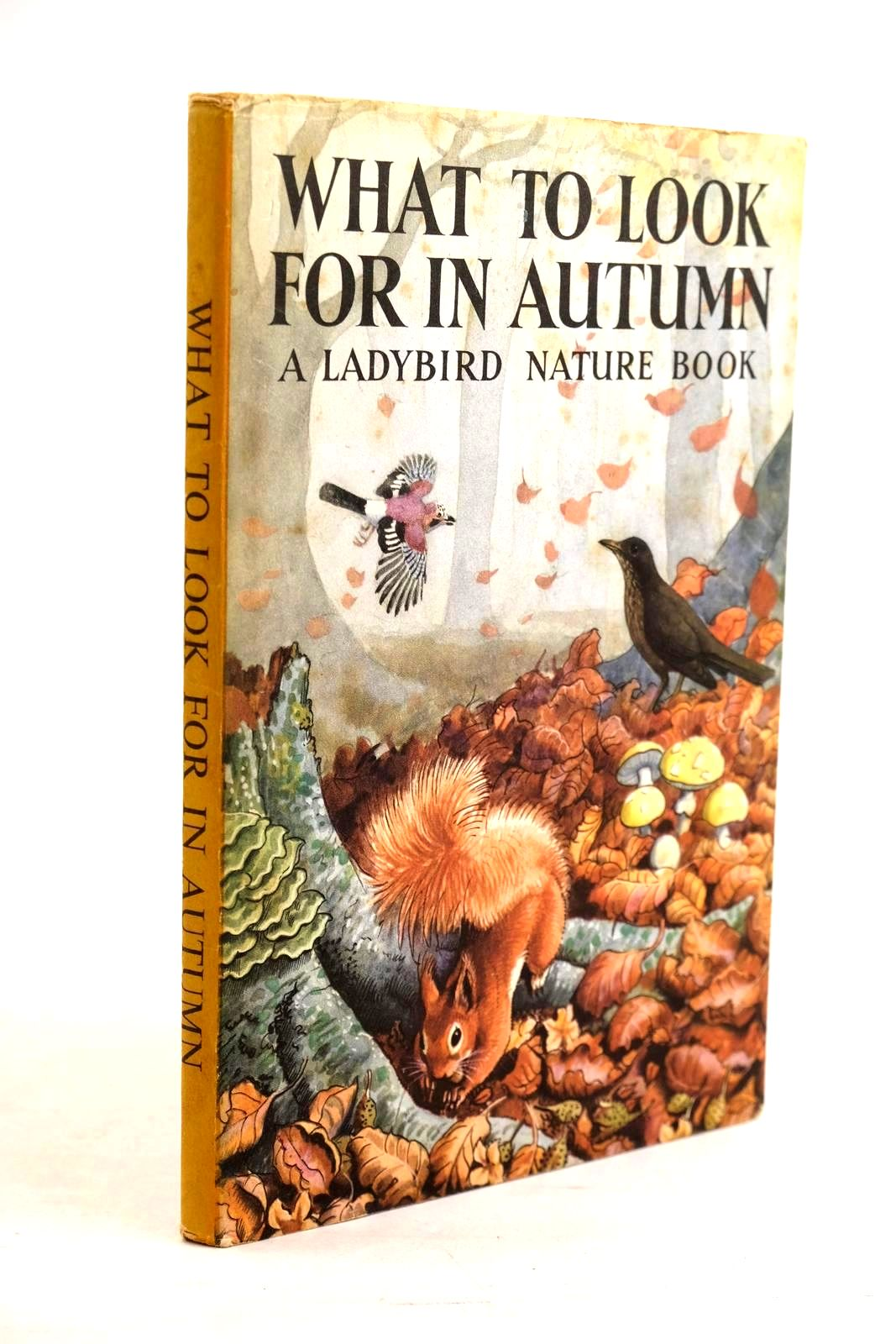 Photo of WHAT TO LOOK FOR IN AUTUMN- Stock Number: 1320637