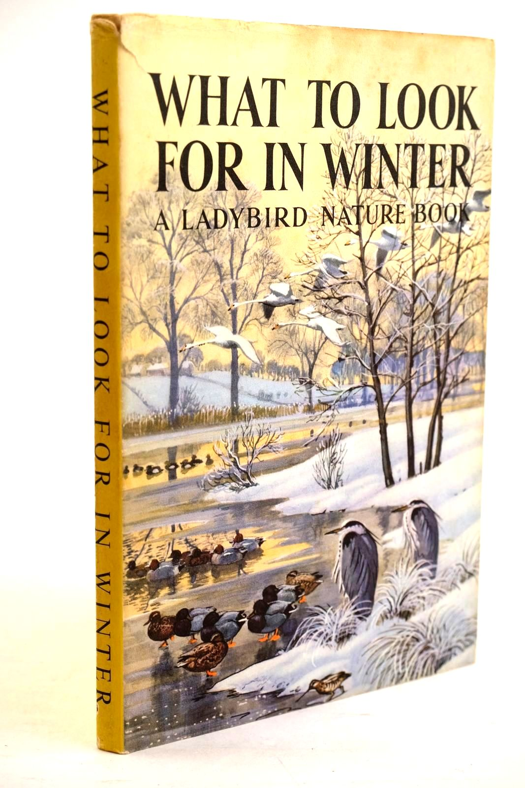 Photo of WHAT TO LOOK FOR IN WINTER- Stock Number: 1320638