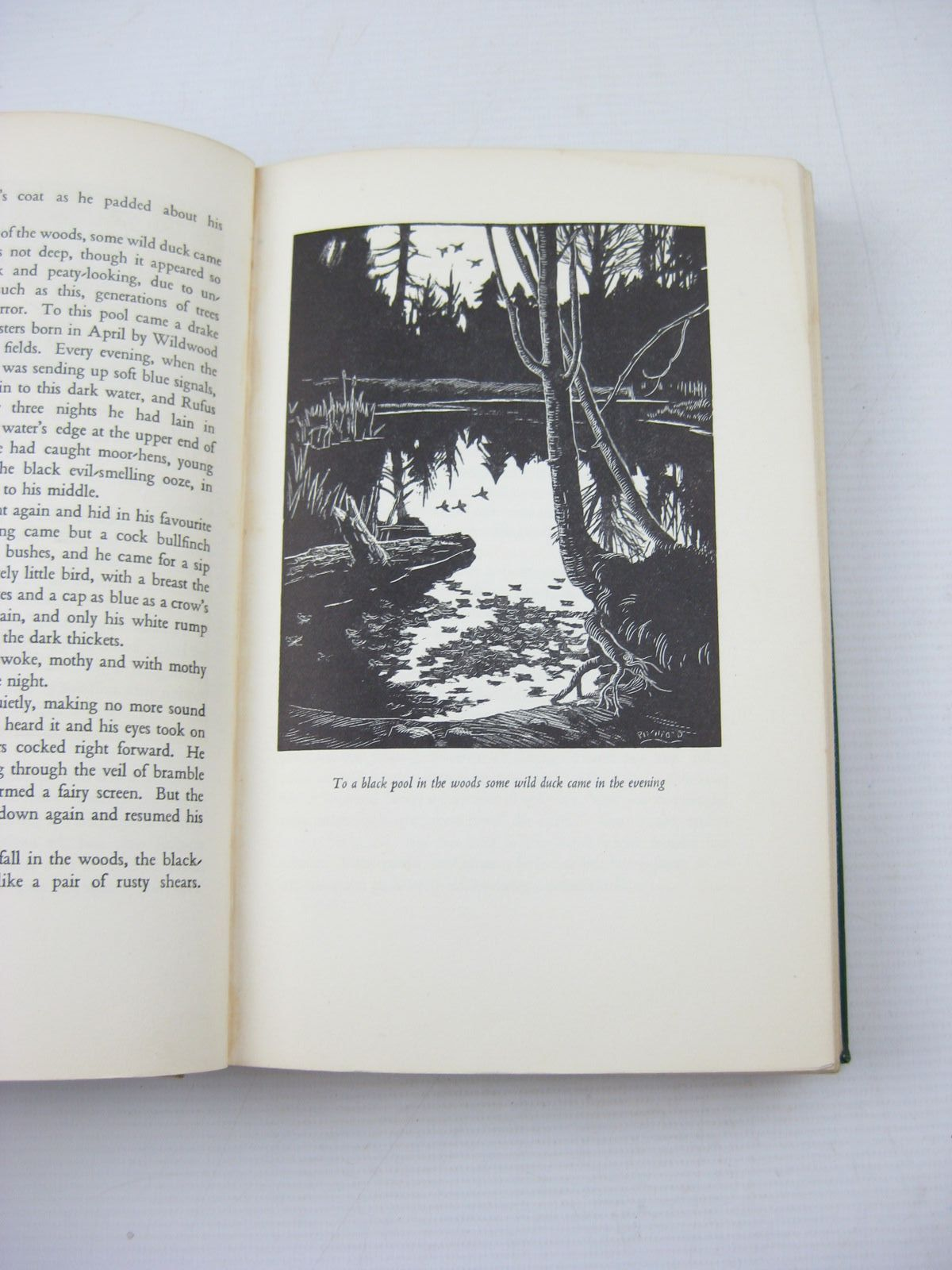 Photo of WILD LONE written by BB,  illustrated by BB,  published by Eyre & Spottiswoode (STOCK CODE: 1503113)  for sale by Stella & Rose's Books