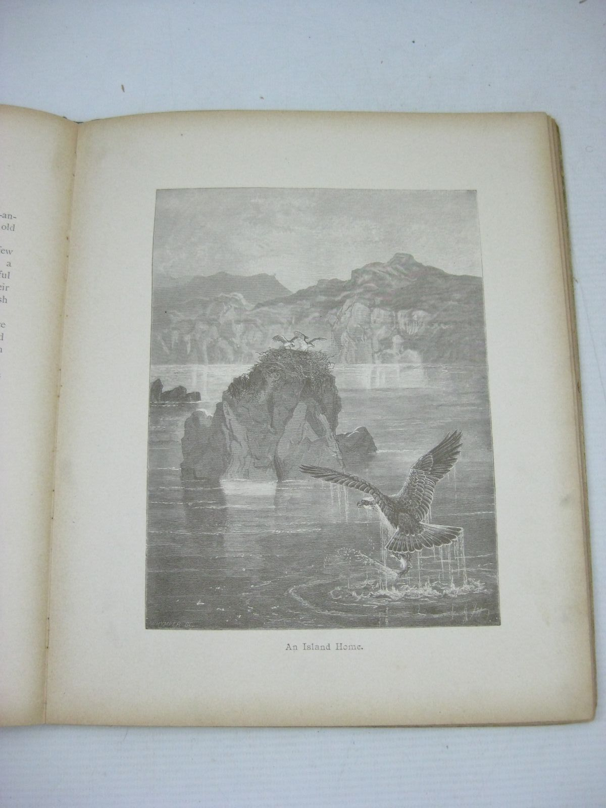 Photo of THE HURDY GURDY written by Hoyer, M.A.
