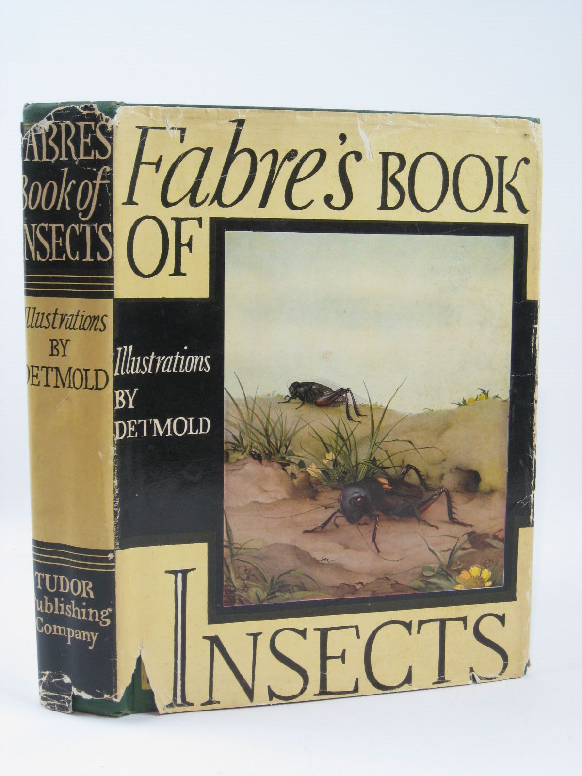 Photo of FABRE'S BOOK OF INSECTS- Stock Number: 1506739
