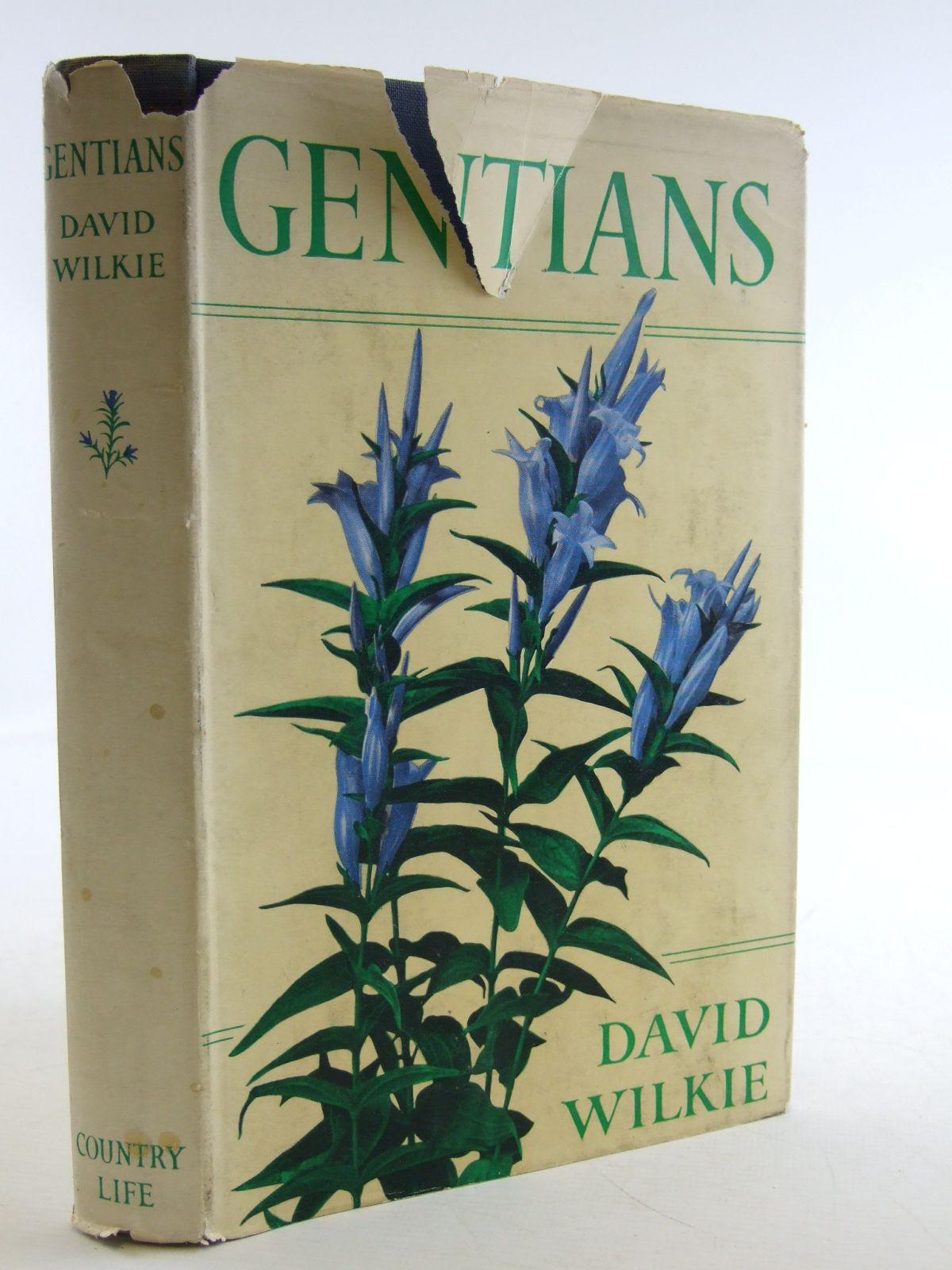 Photo of GENTIANS- Stock Number: 1603831