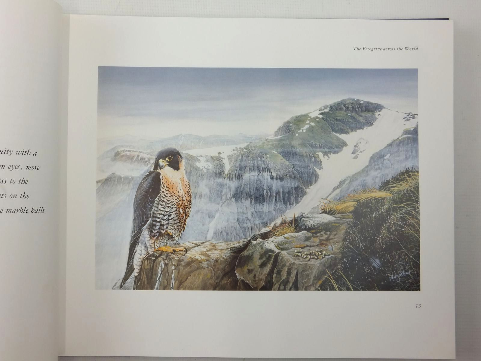 Photo of PEREGRINE written by Ford, Emma illustrated by Rhodes, Antony published by Fourth Estate (STOCK CODE: 1609819)  for sale by Stella & Rose's Books