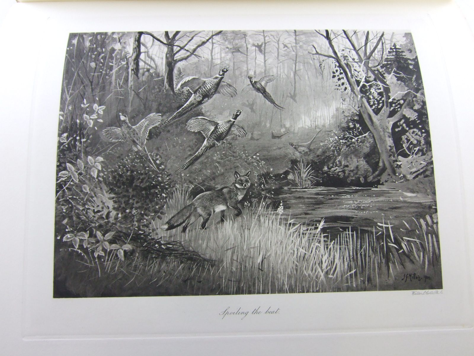 Photo of THE MAMMALS OF GREAT BRITAIN AND IRELAND written by Millais, J.G. illustrated by Millais, J.G. Thorburn, Archibald Lodge, G.E. Gronvold, Henrik published by Longmans, Green & Co. (STOCK CODE: 1706435)  for sale by Stella & Rose's Books