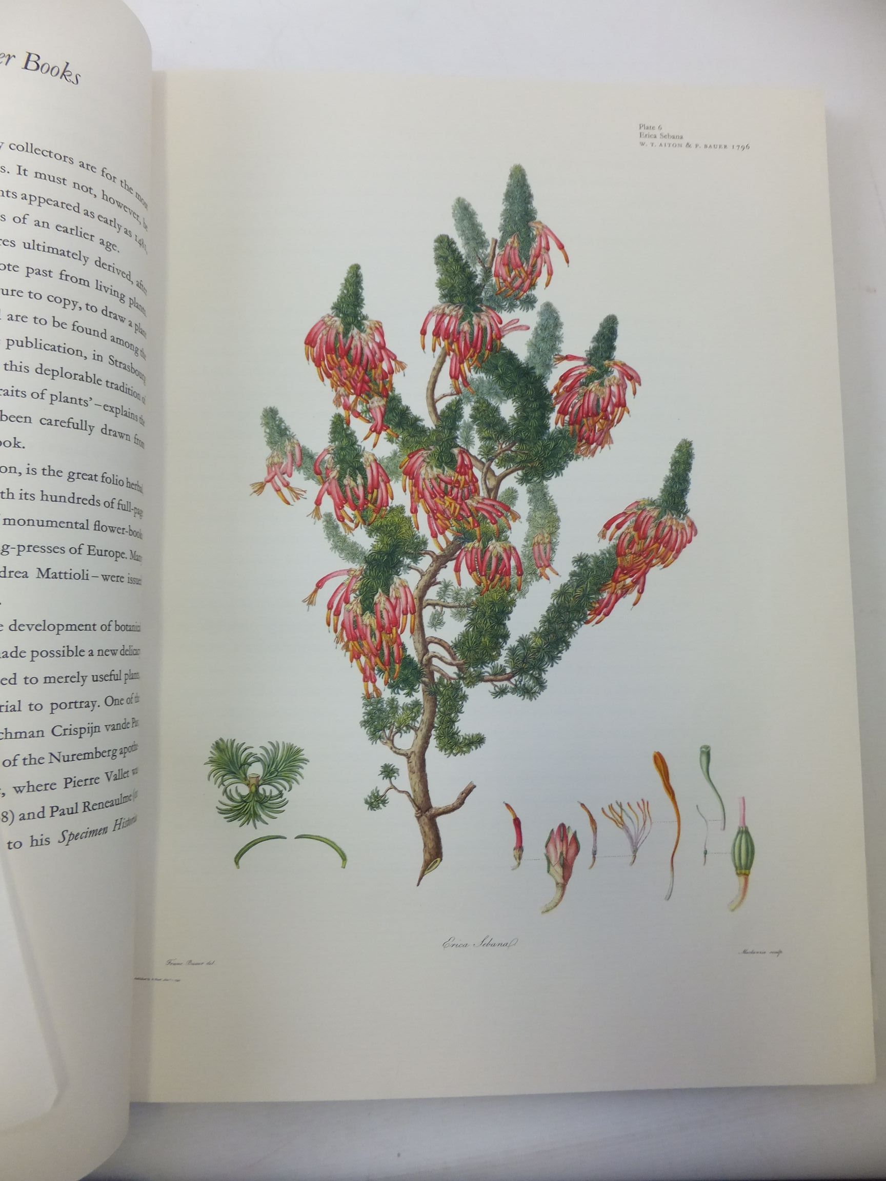 Photo of GREAT FLOWER BOOKS 1700-1900 written by Sitwell, Sacheverell