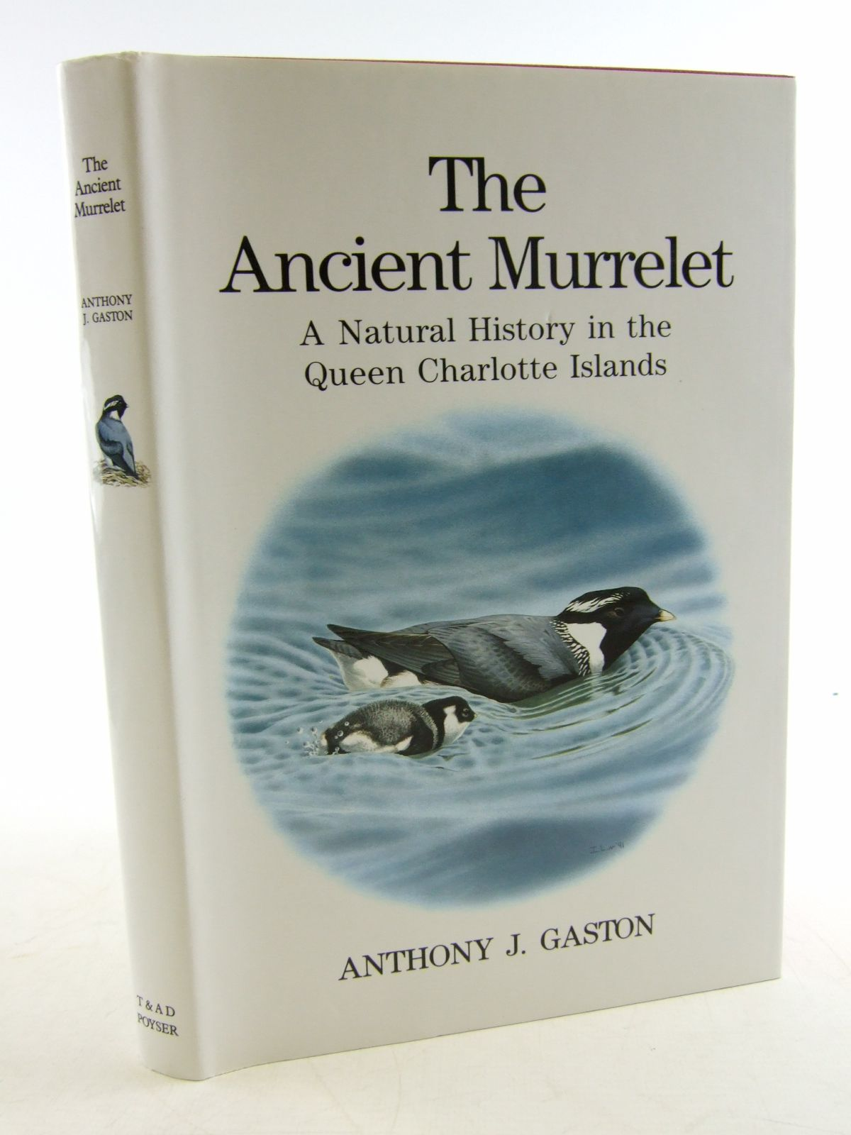 Photo of THE ANCIENT MURRELET written by Gaston, Anthony J. illustrated by Jones, Ian published by T. & A.D. Poyser (STOCK CODE: 1806312)  for sale by Stella & Rose's Books