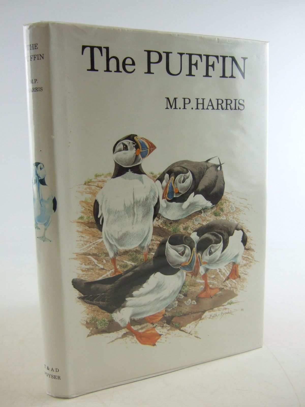 Photo of THE PUFFIN- Stock Number: 1806340