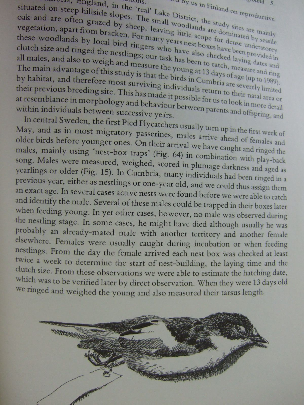 Photo of THE PIED FLYCATCHER written by Lundberg, Arne Alatalo, Rauno V. illustrated by Part, Tomas published by T. & A.D. Poyser (STOCK CODE: 1806344)  for sale by Stella & Rose's Books