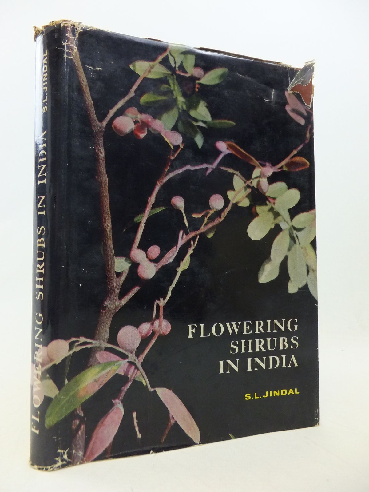 Photo of FLOWERING SHRUBS IN INDIA written by Jindal, S.L. published by Publications Division, Ministry Of Information And Broadcasting (STOCK CODE: 1809035)  for sale by Stella & Rose's Books