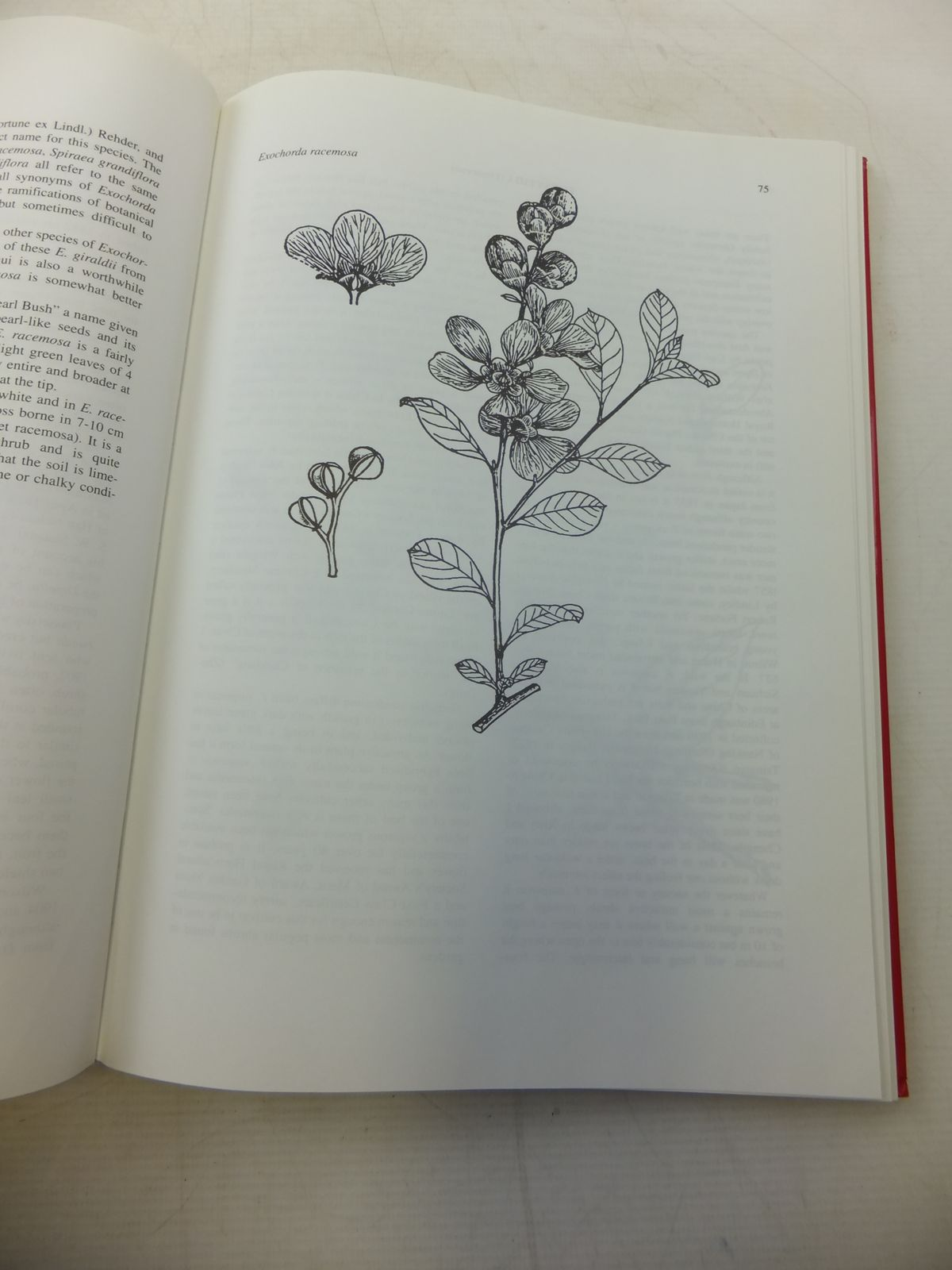 Photo of THE INTRODUCTION OF CHINESE PLANTS INTO EUROPE written by Lauener, L.A. published by Spb Academic Publishing (STOCK CODE: 1809288)  for sale by Stella & Rose's Books