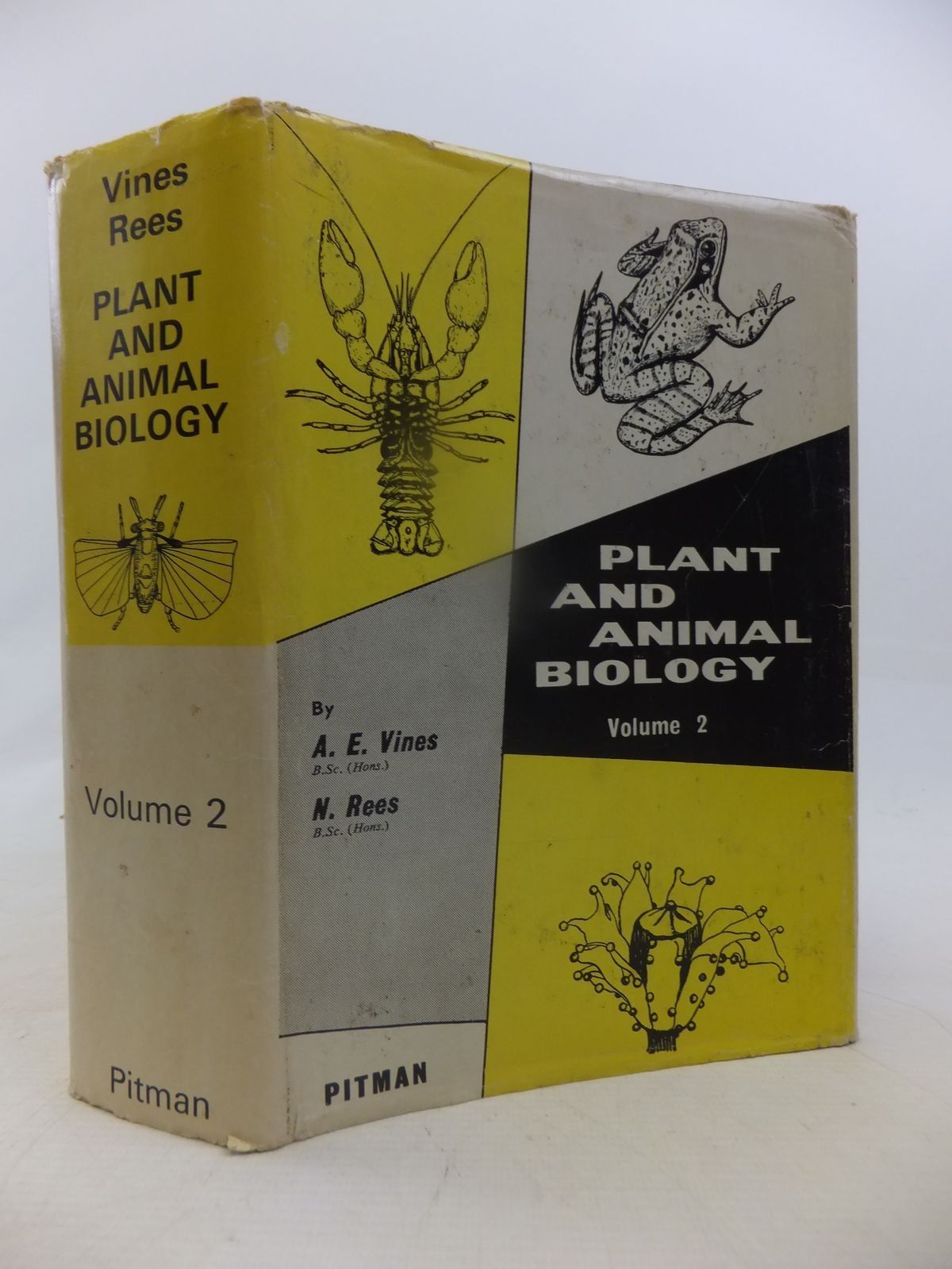 Photo of PLANT AND ANIMAL BIOLOGY VOLUME II written by Vines, A.E. Rees, N. published by Sir Isaac Pitman & Sons Ltd. (STOCK CODE: 1809444)  for sale by Stella & Rose's Books