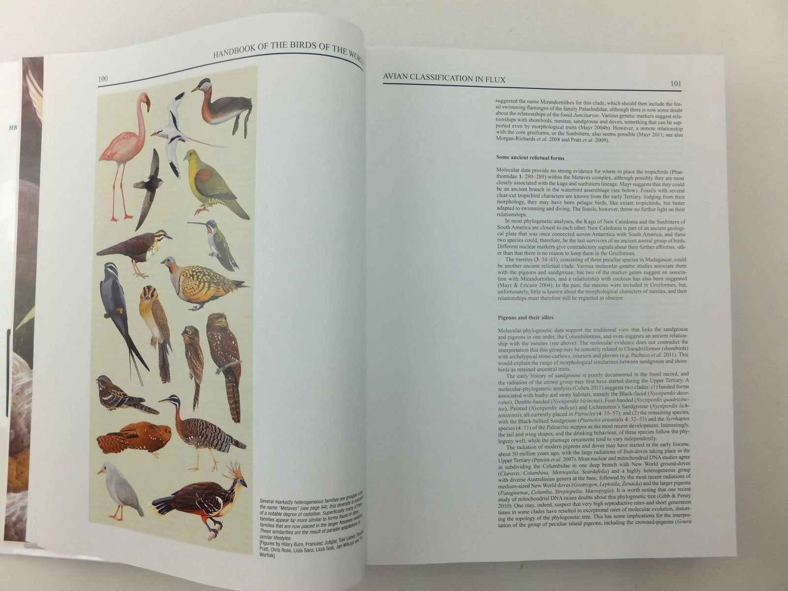 Photo of HANDBOOK OF THE BIRDS OF THE WORLD SPECIAL VOLUME: NEW SPECIES AND GLOBAL INDEX written by Del Hoyo, Josep Elliott, Andrew Sargatal, Jordi Christie, David illustrated by Burn, Hilary Rose, Chris Fjeldsa, Jon et al., published by Lynx Edicions (STOCK CODE: 1814453)  for sale by Stella & Rose's Books