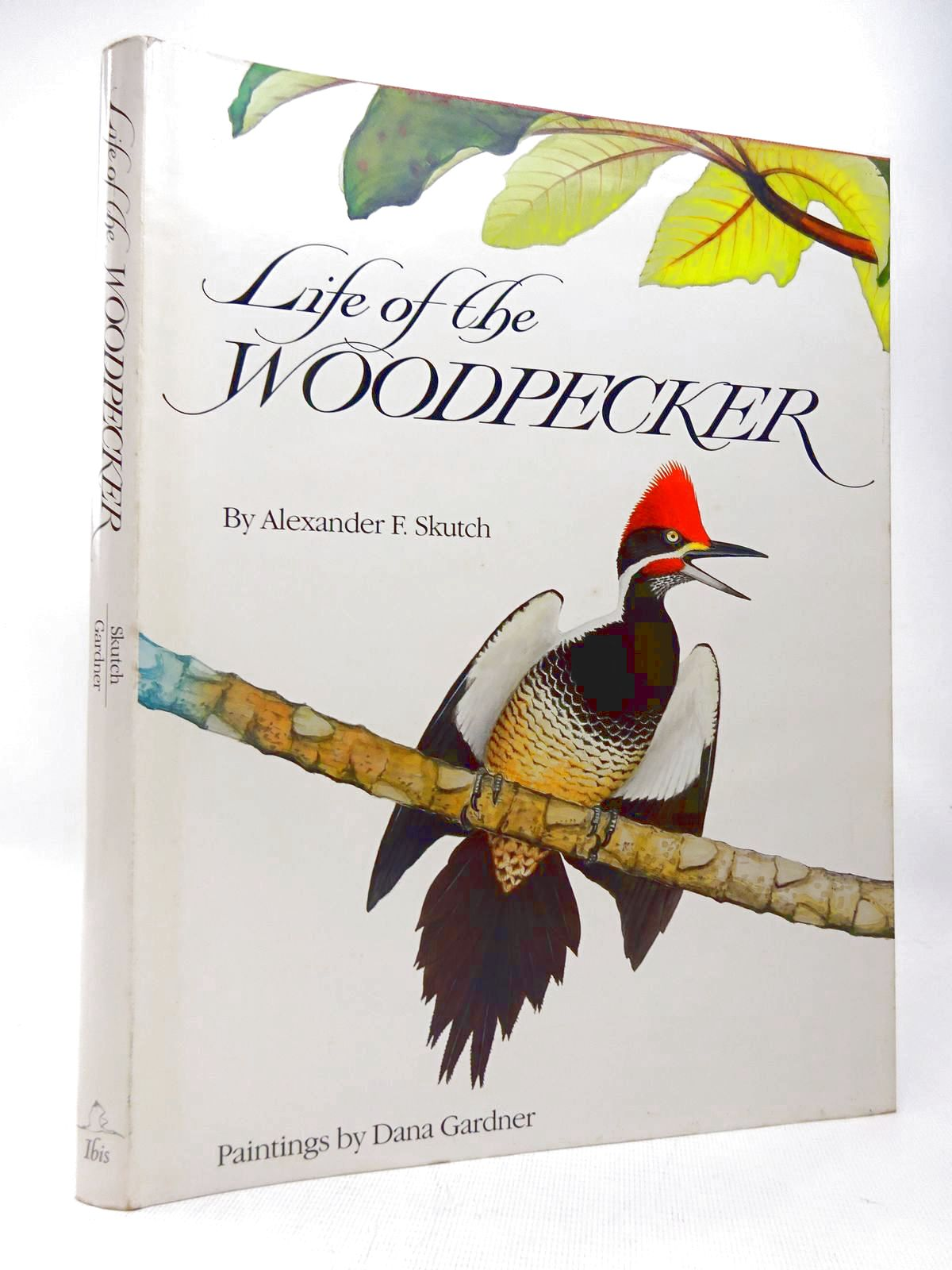 Photo of LIFE OF THE WOODPECKER- Stock Number: 1816539