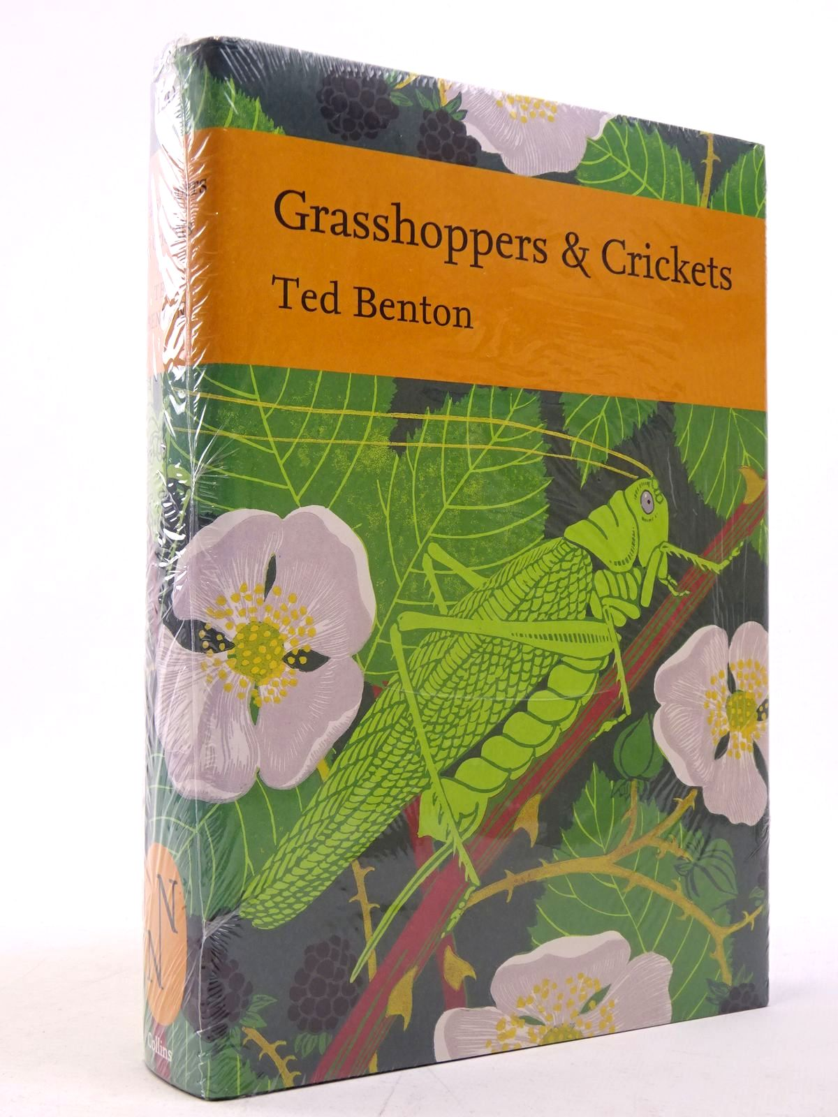 Photo of GRASSHOPPERS & CRICKETS (NN120)- Stock Number: 1817552