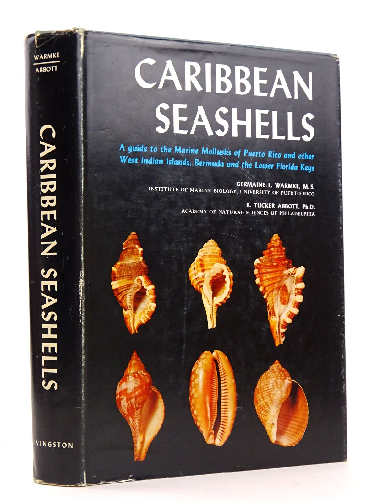 Photo of CARIBBEAN SEASHELLS- Stock Number: 1818337