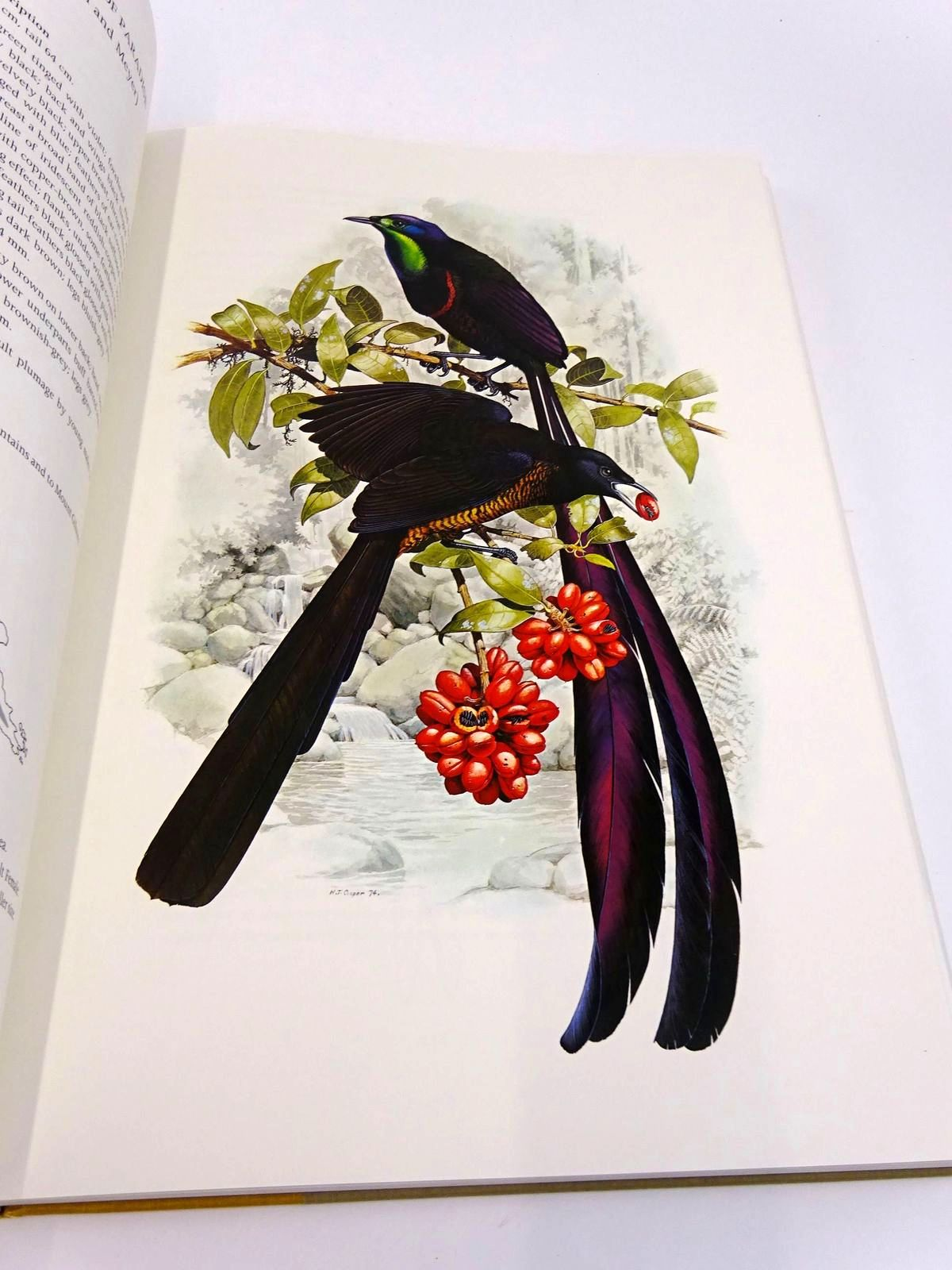 Photo of THE BIRDS OF PARADISE AND BOWER BIRDS written by Cooper, William T. Forshaw, Joseph M. illustrated by Cooper, William T. published by Collins (STOCK CODE: 1818360)  for sale by Stella & Rose's Books