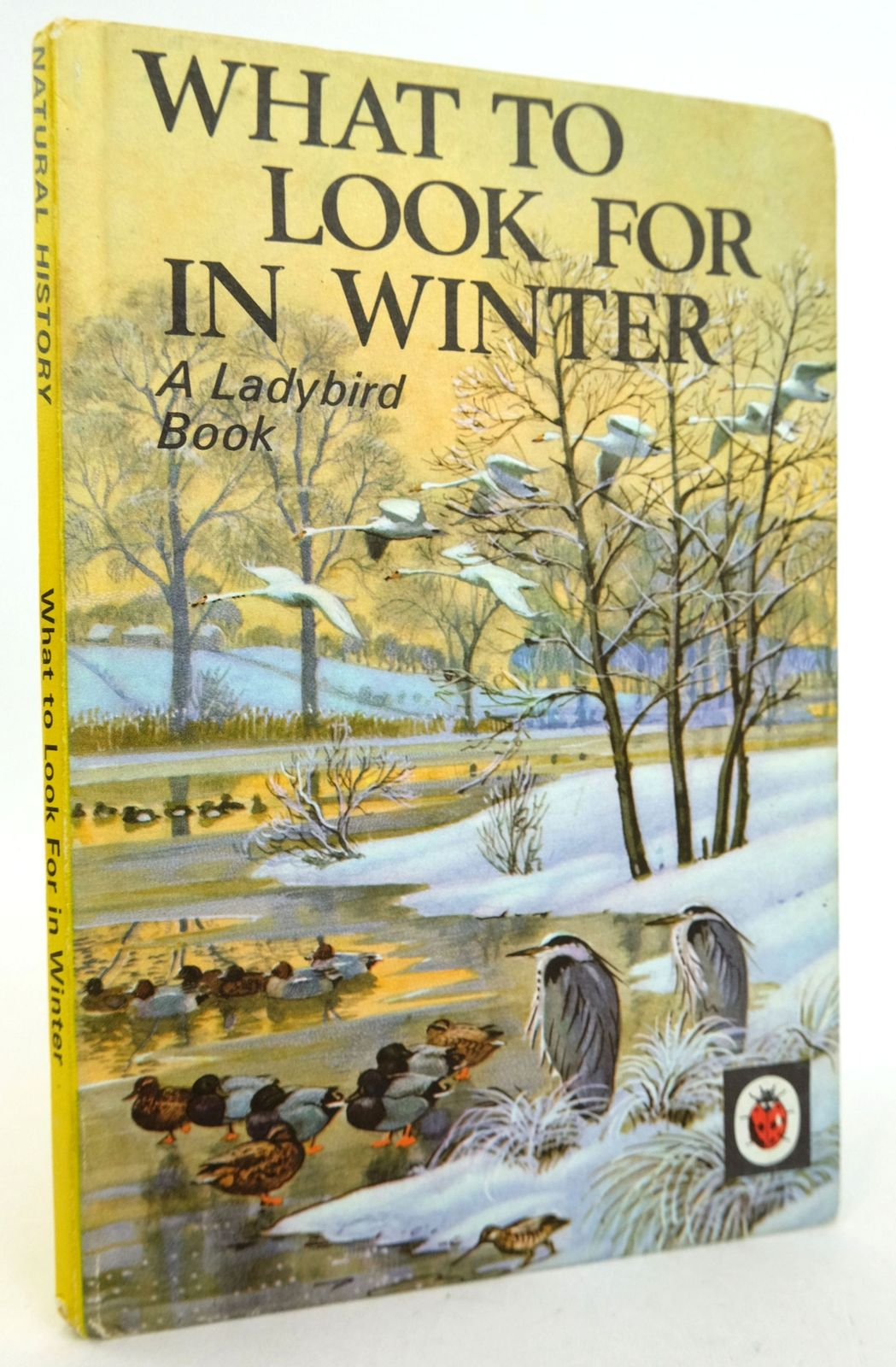 Photo of WHAT TO LOOK FOR IN WINTER- Stock Number: 1819193