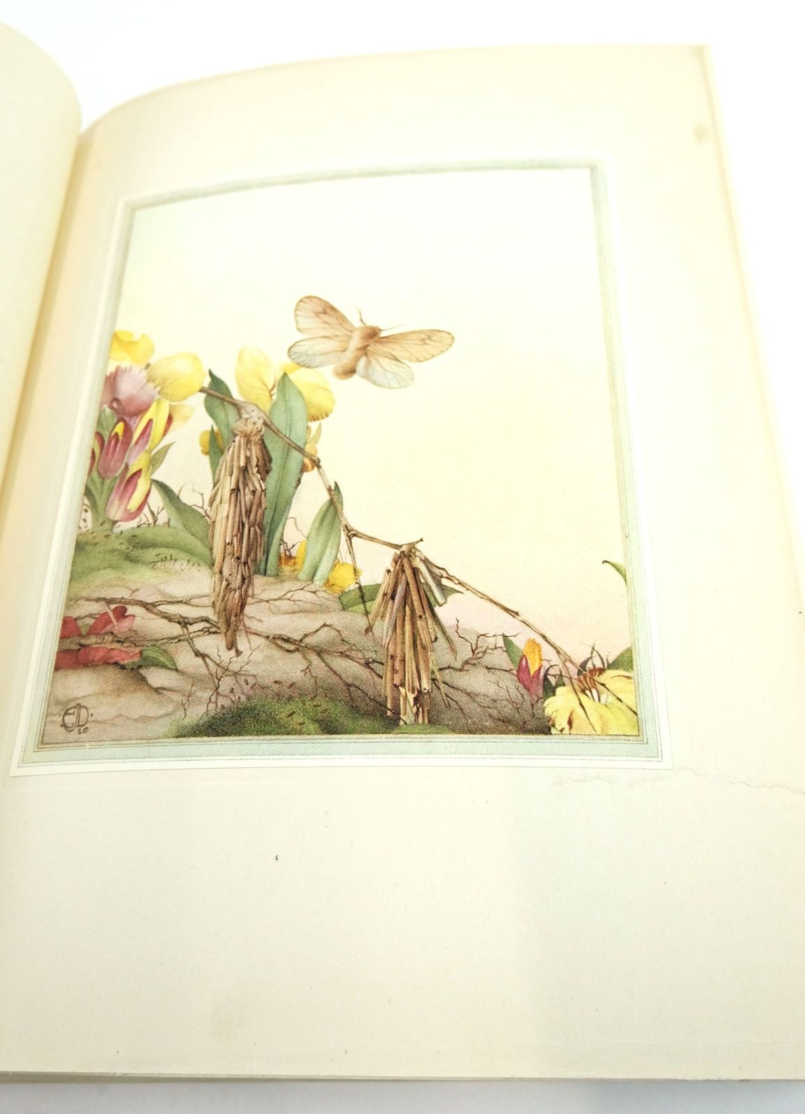 Photo of FABRE'S BOOK OF INSECTS written by Stawell, Mrs. Rodolph Macfie, Dr. R. Fabre, J.H. illustrated by Detmold, Edward J. published by Hodder & Stoughton (STOCK CODE: 1819857)  for sale by Stella & Rose's Books