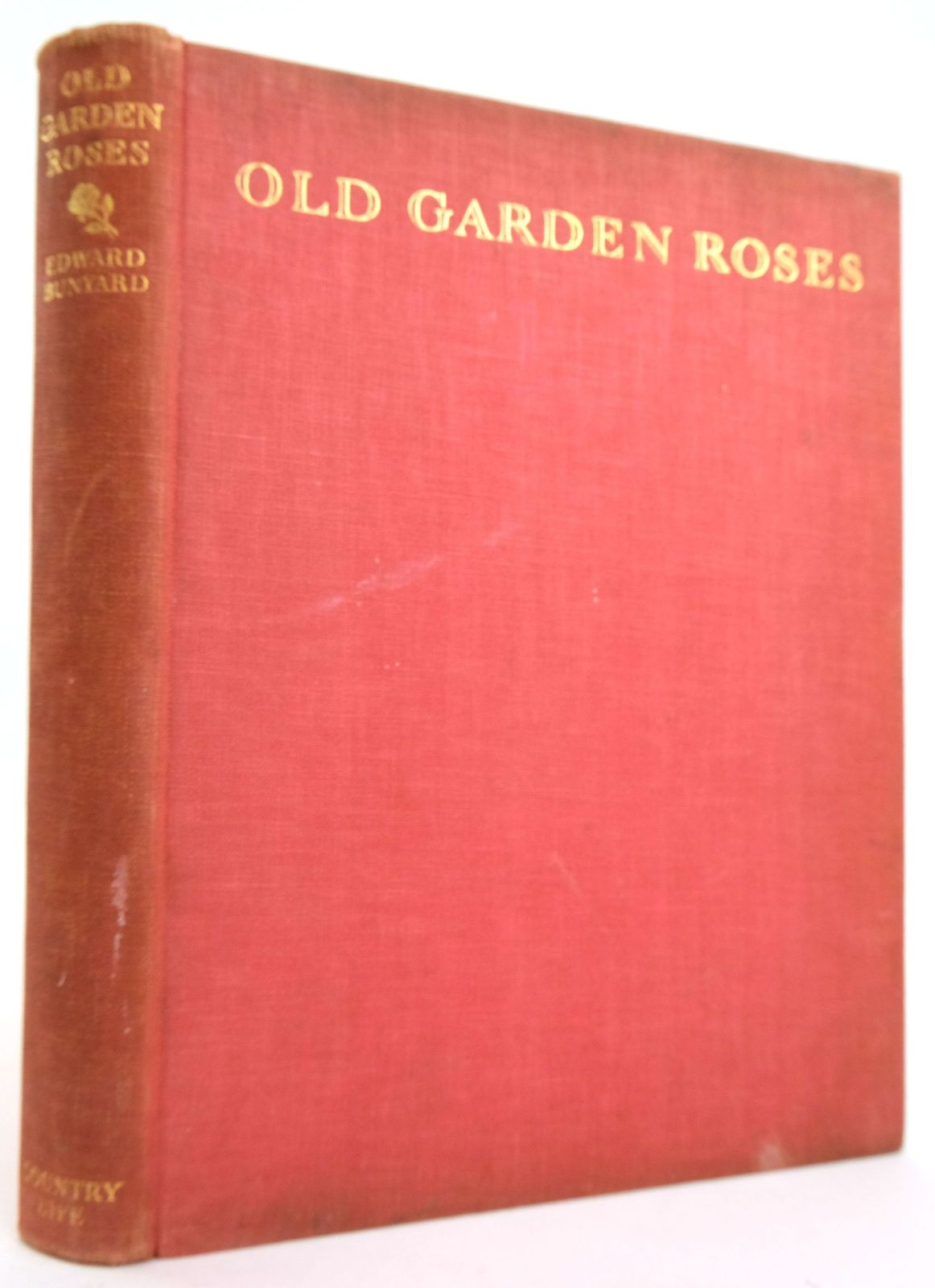 Photo of OLD GARDEN ROSES written by Bunyard, Edward A. published by Country Life (STOCK CODE: 1820175)  for sale by Stella & Rose's Books