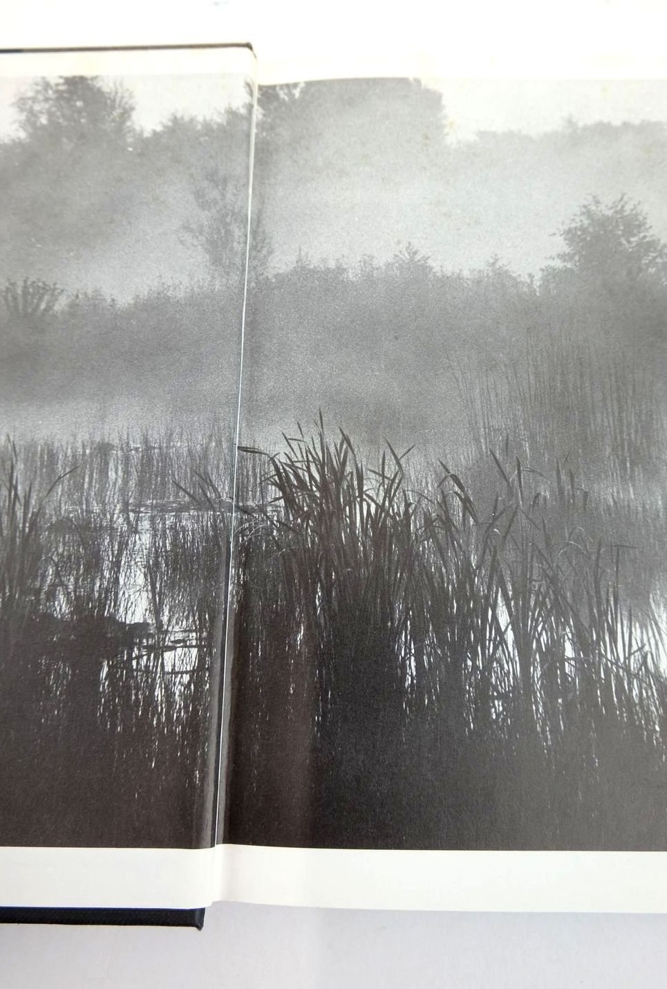Photo of CASTING AT THE SUN: THE REFLECTIONS OF A CARP FISHER written by Yates, Christopher published by Pelham Books (STOCK CODE: 1820937)  for sale by Stella & Rose's Books