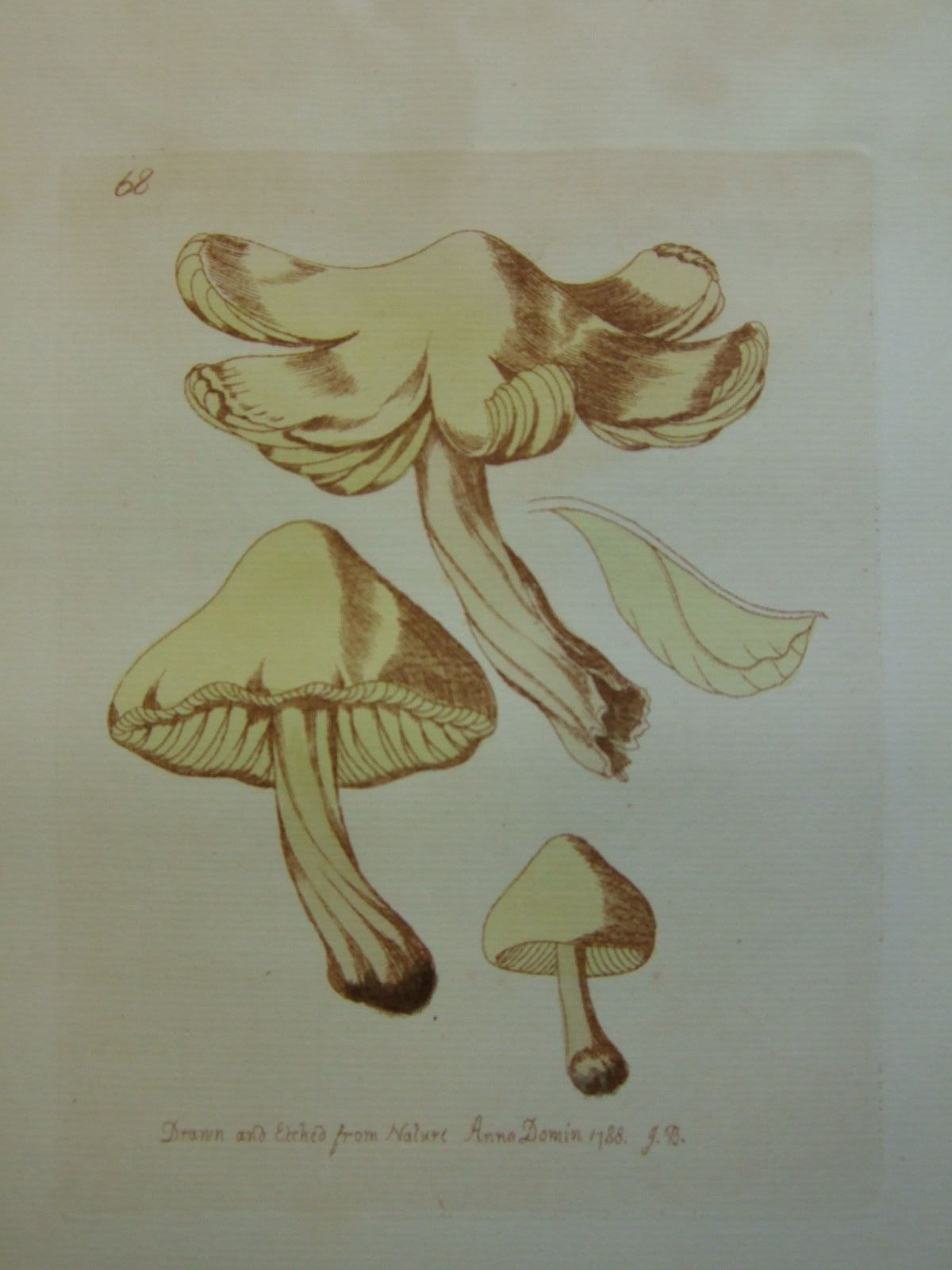Photo of AN HISTORY OF FUNGUSSES, GROWING ABOUT HALIFAX (VOLUME II) written by Bolton, James illustrated by Bolton, James (STOCK CODE: 2109298)  for sale by Stella & Rose's Books